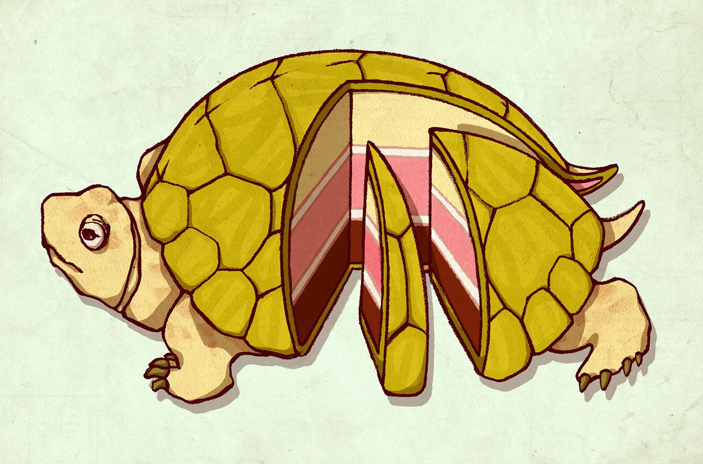 3_turtlecake.jpg