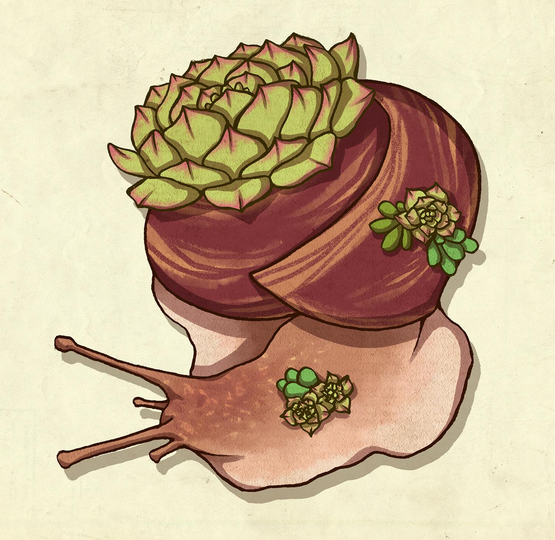 27_snailsucculent.jpg