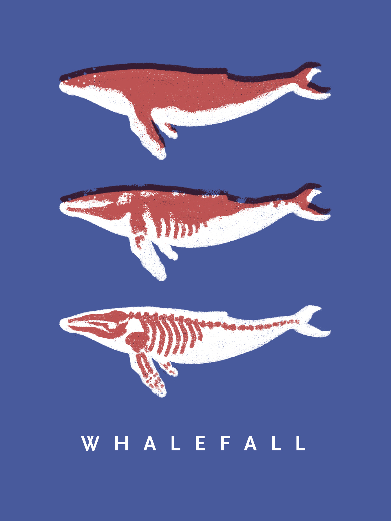 whale_falls_zine.jpg