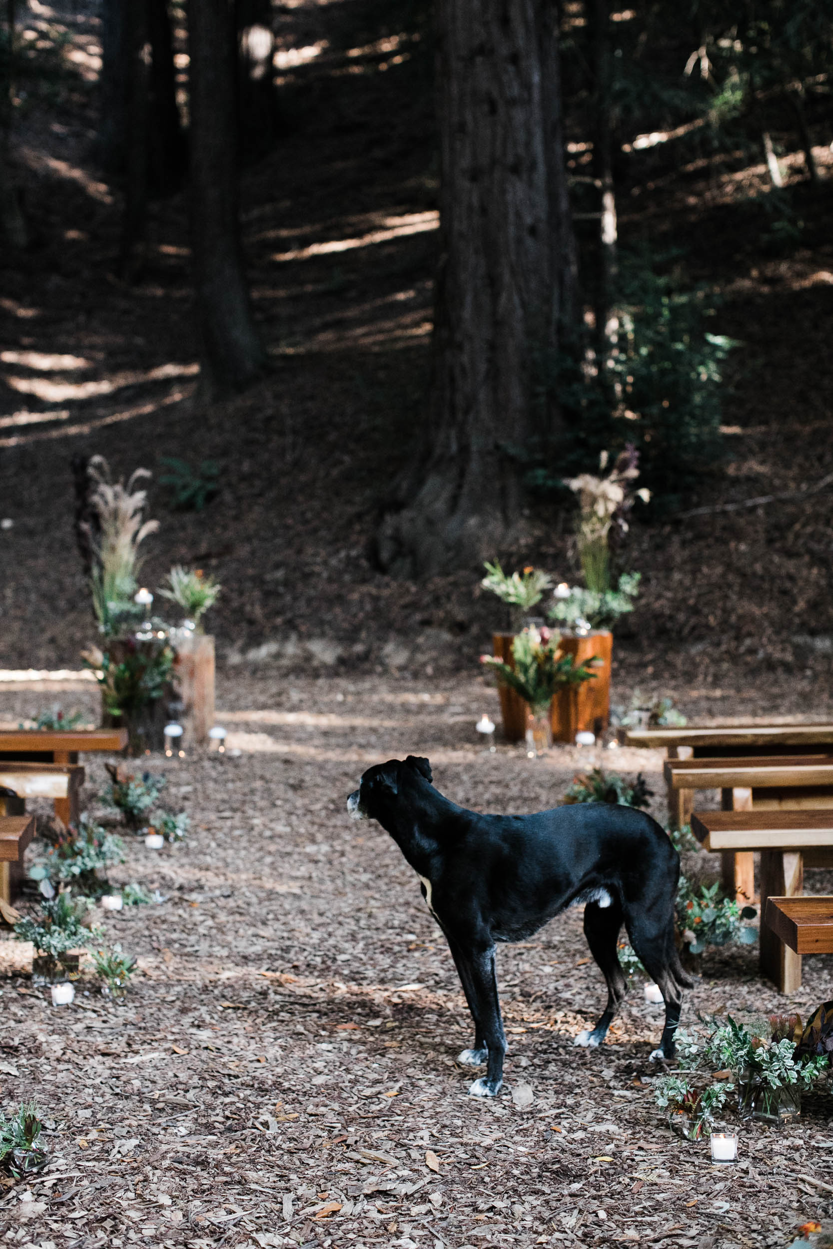 Ventana Big Sur Wedding_Buena Lane Photography__79A1392.jpg