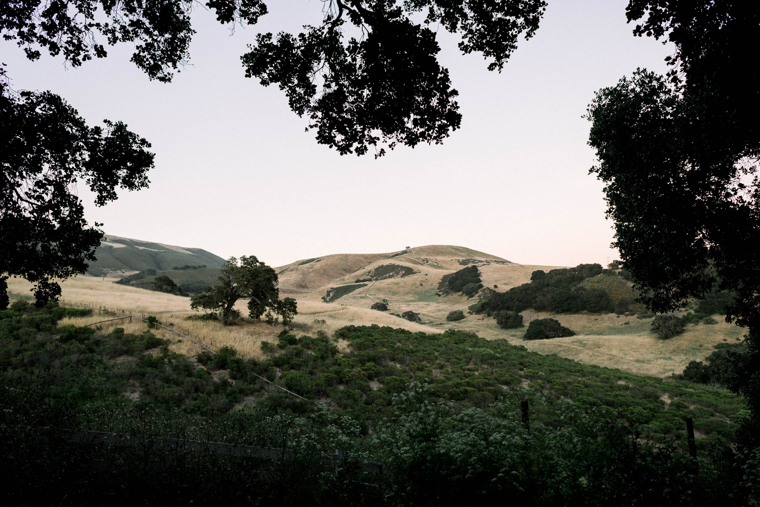 C+D_Holman Ranch Wedding_Carmel Valley_Buena Lane Photography_060619_ER933.jpg