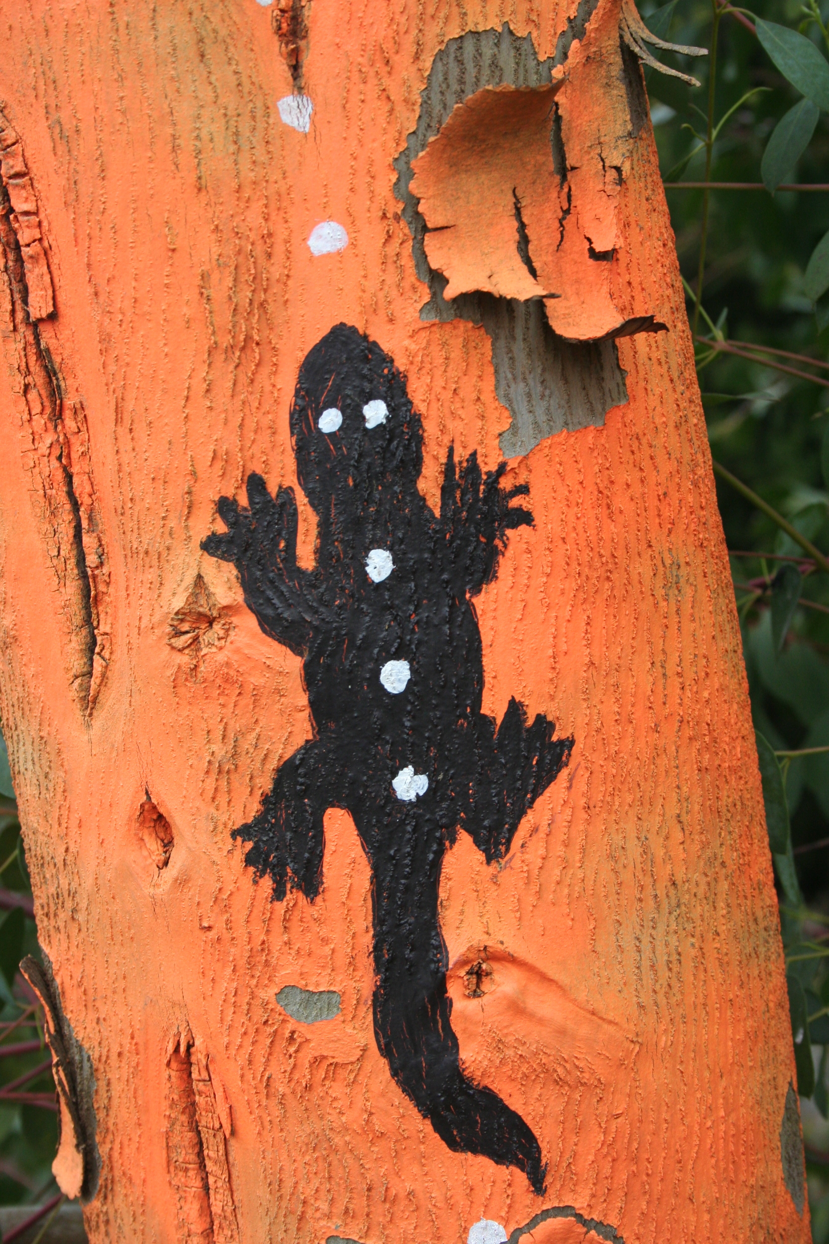 Aboriginal art on eucalyptus tree in WG.JPG