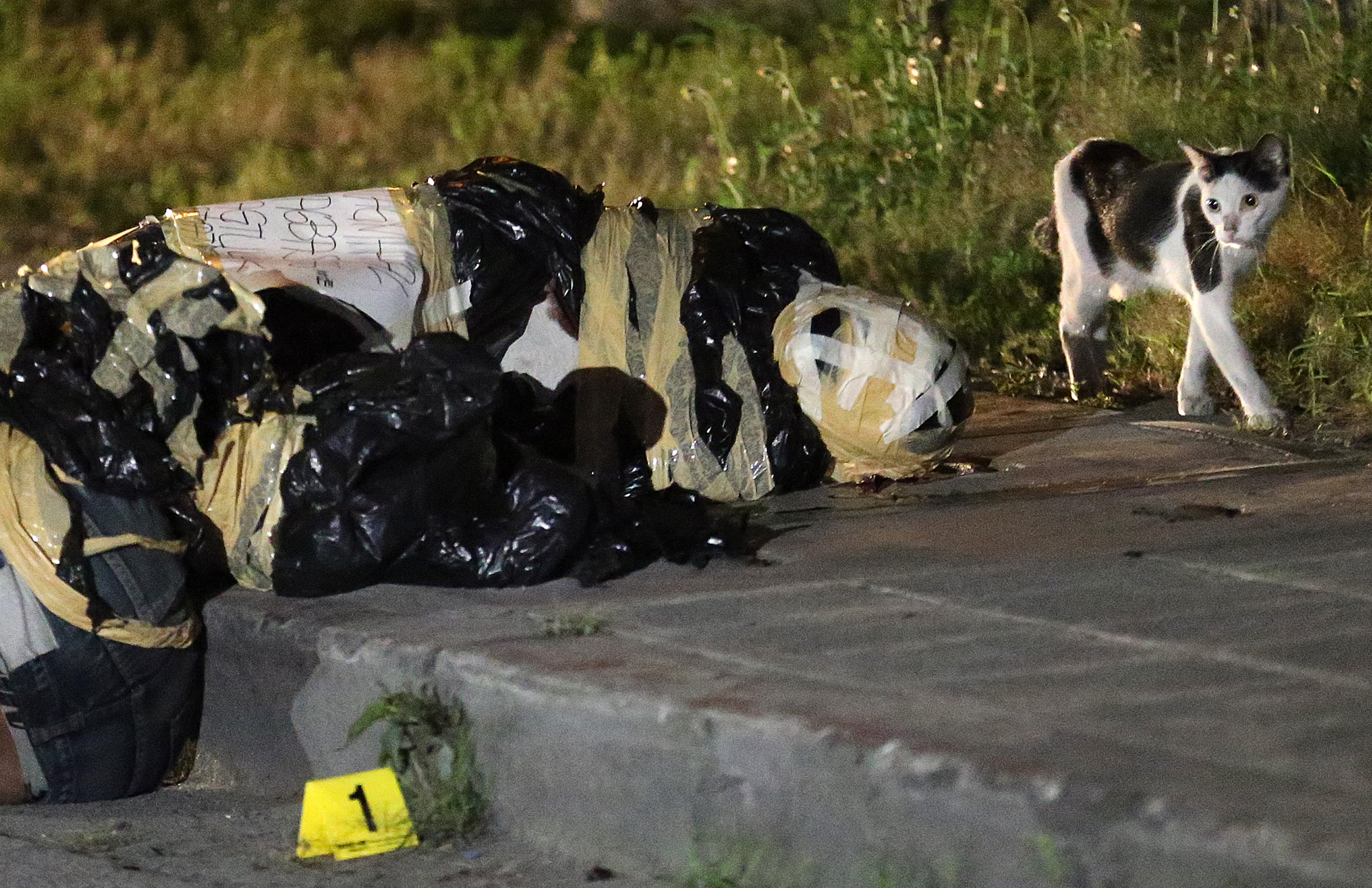 "A cat looks at the dead bodies wrapped in garbage bags found at Estacion St, Barangay Pio del Pilar, Makati City on December 1, 2016. Placards which wrote, ""Nagmahal, Nasaktan, Nagtulak, #Namatay"" and ""Nagmahal, Nasaktan, Nag-basag kotse, #Namatay"" were left beside unidentified victims."