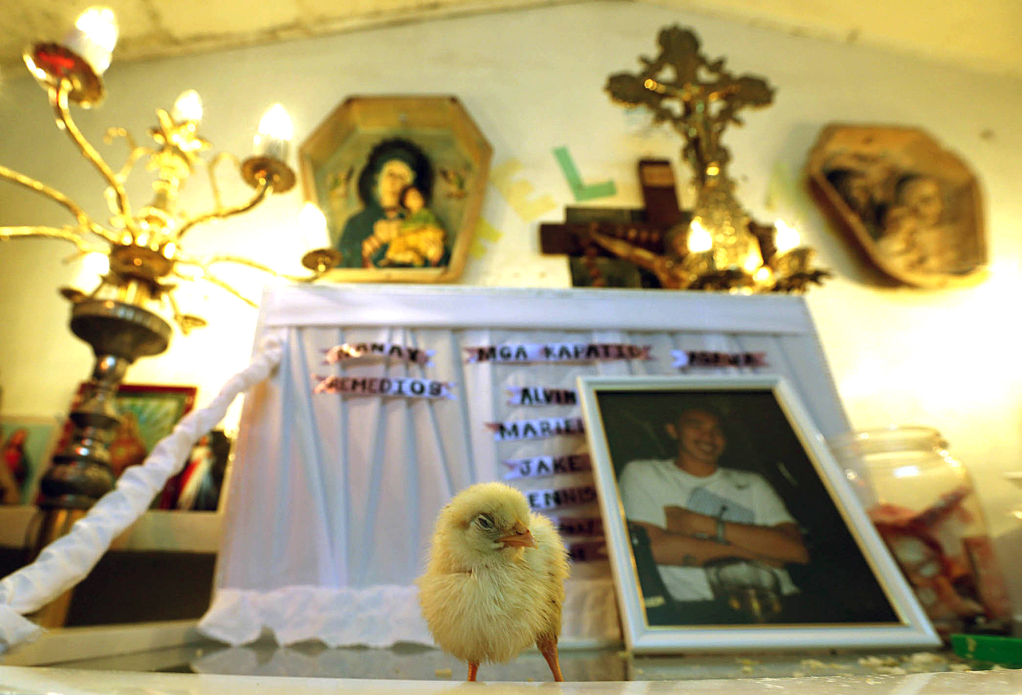 A chick rests on top of the coffin of pedicab driver Eric Sison who was killed by the police during a drug operation on August 23,2016 at Barangay 43, Pasay City. In the Philippines, a chick is placed on the glass of a coffin of a person whose cause of death is questionable. It is a local custom where the chick pecking on the coffin's glass symbolizes the loved ones longing for justice, a play on bothering the conscience of the perpetrators.