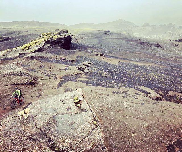 Æsir the MTB husky likes flowy single tracks, razor sharp lava and leading the way. #alpharider #voff #mountainbiking #mtblife #madeinmts #mountainbike #mountainbiker #husky #iceland #mtb #mtbtrail #mtbpictureoftheday #canyonbikes