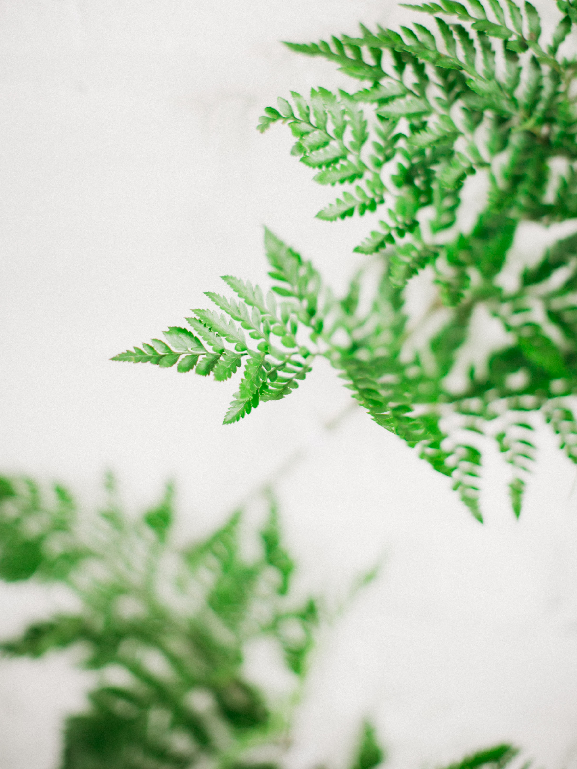 by Aimee Jobe Luminary Fern Brainerd Wedding Venue Greenery Bloom Designs-5.jpg