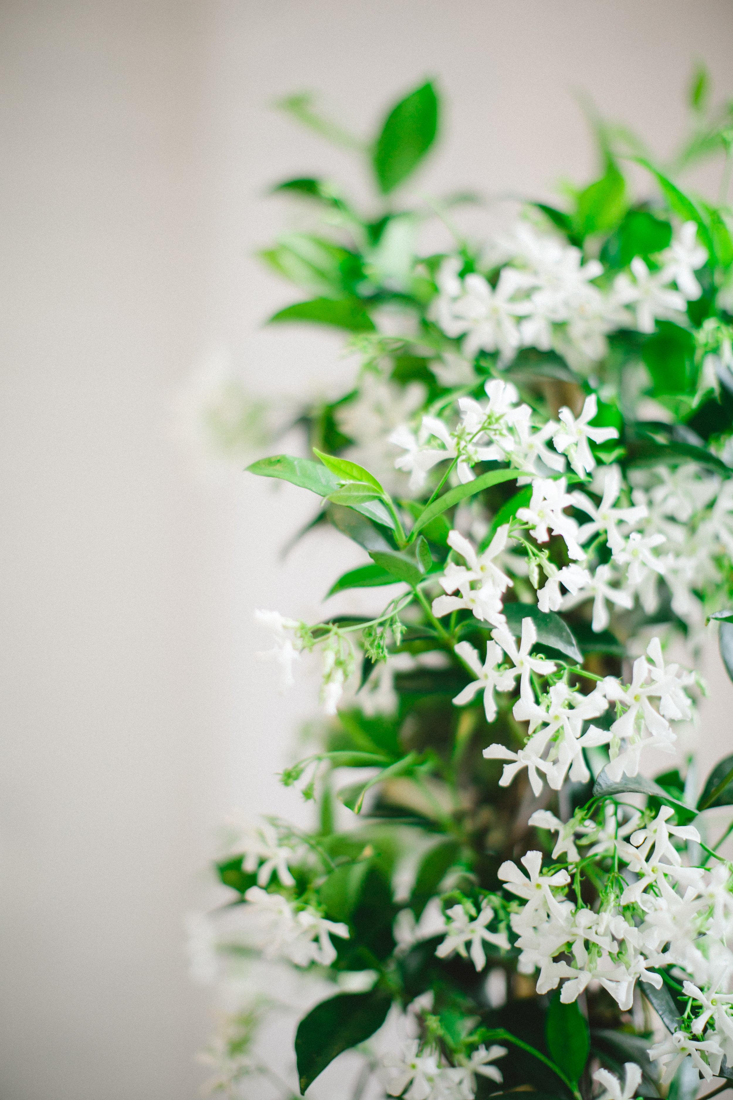 by Aimee Jobe Photography Bloom Designs Flower Workshop Brainerd-1.jpg