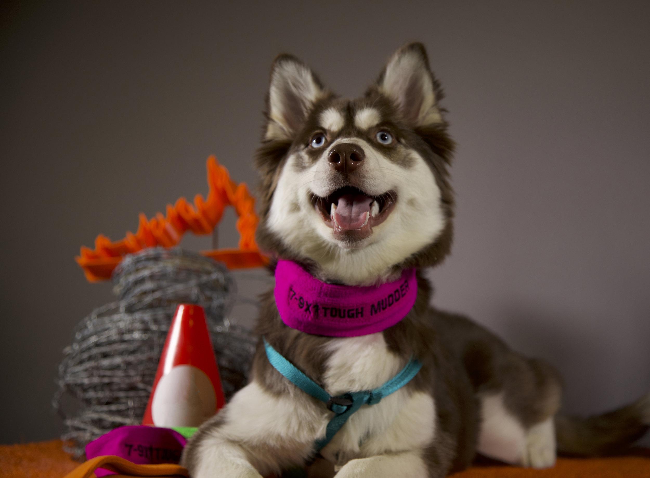 Husky Pic.jpeg