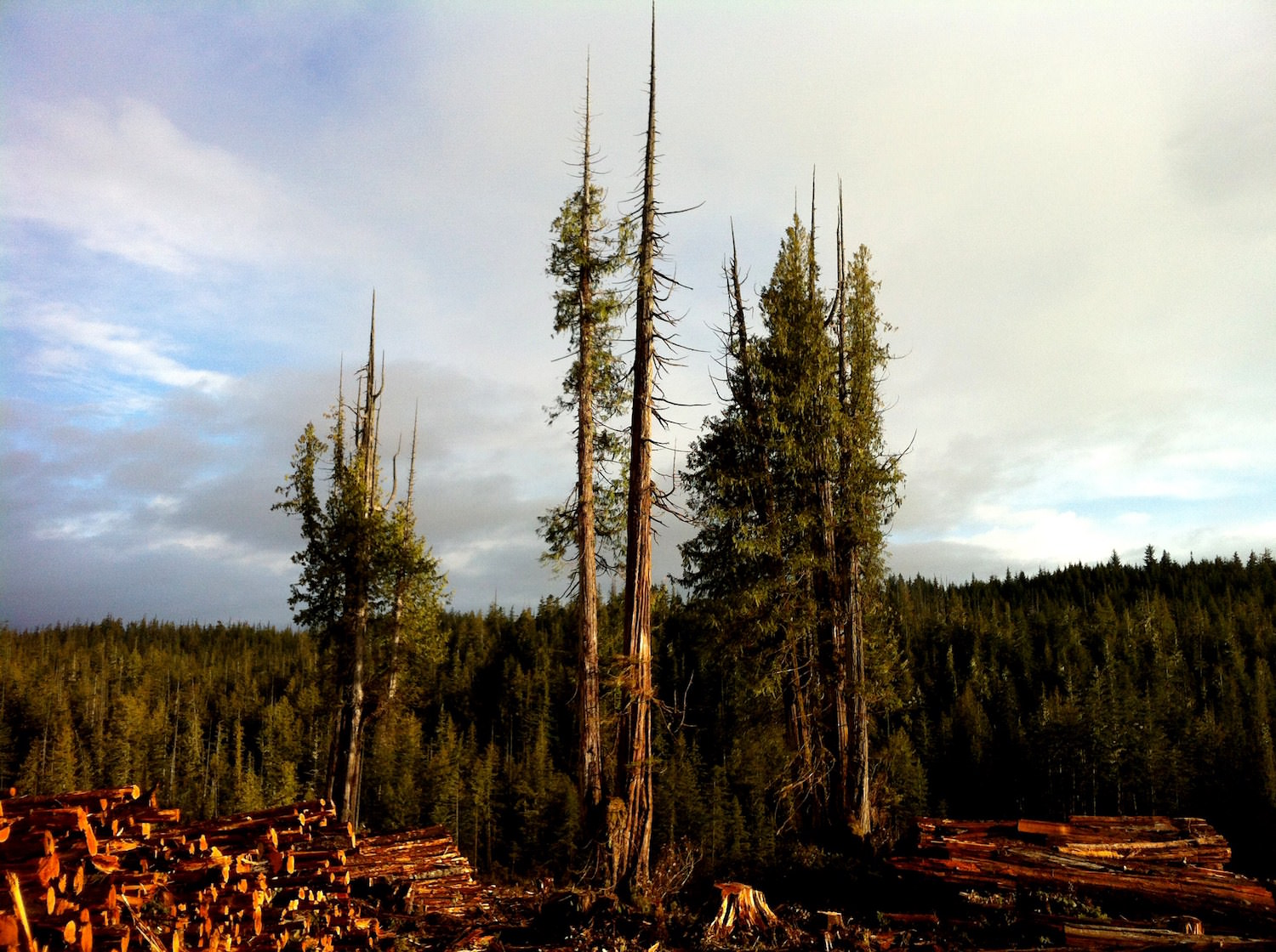 Timberlands / Between Port Hardy and Fort Rupert, British Columbia