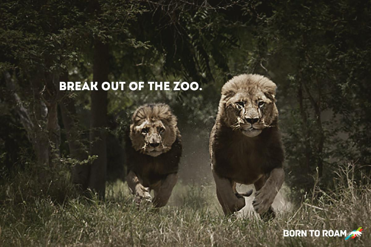 Break-out-of-the-Zoo.jpg