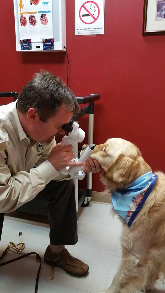 Dr. Jeff Bowersox w/ Beauregard, Veterinary Specialty Center of Delaware
