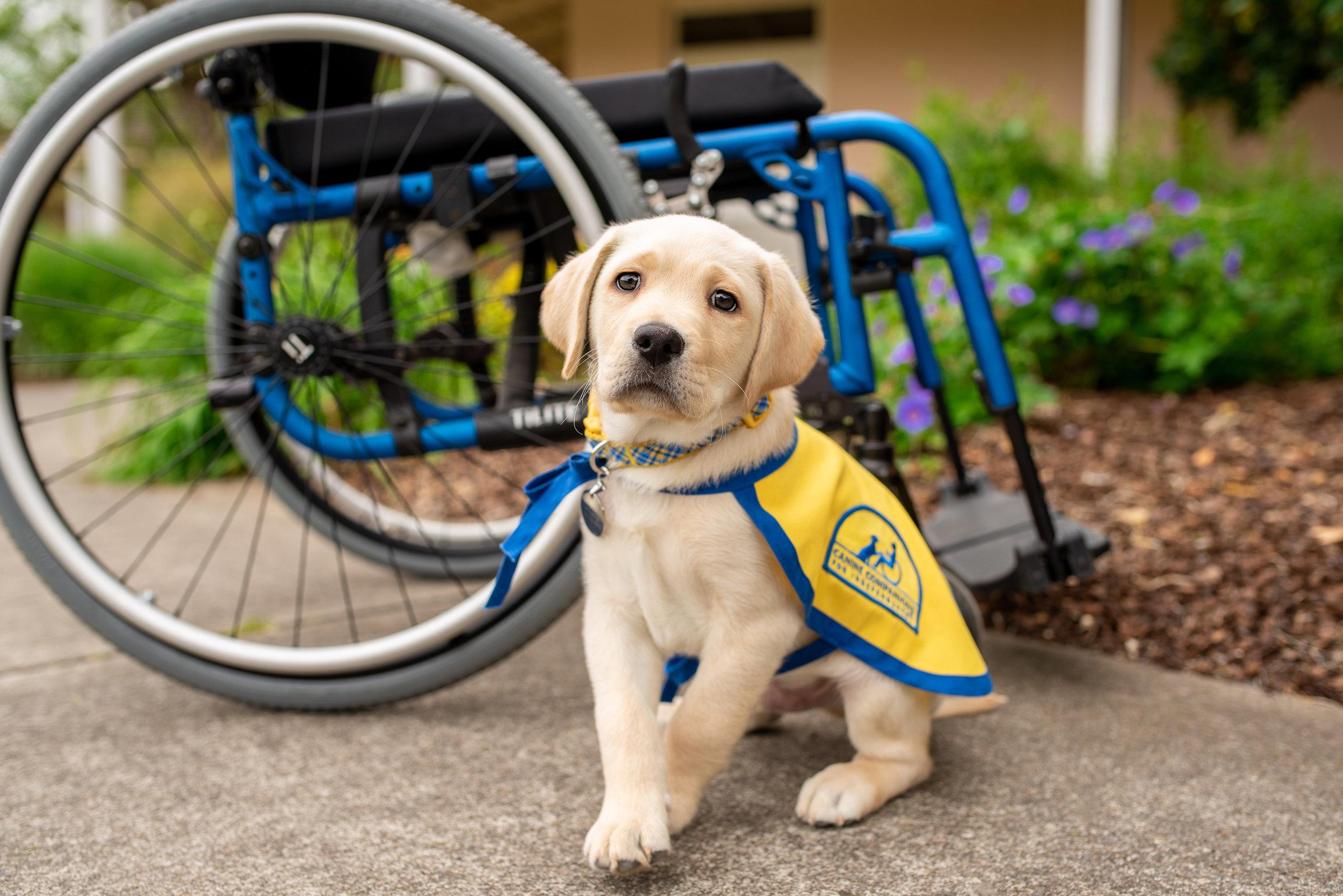 01 Post July 30  TUE x70-Phil.Wilt.Handicapp_Assistant.2019-DSC_2030.jpg