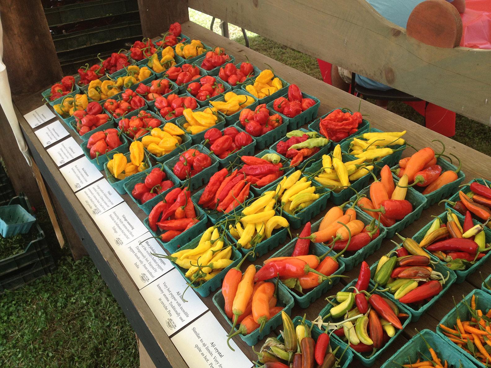 Chilifest The Kitchen Garden