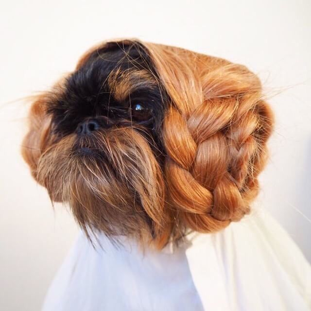 starwars :     To us, this dog is royalty.