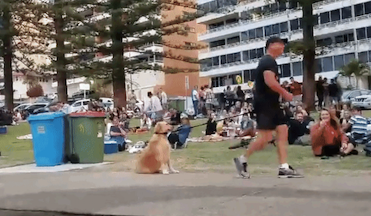 laughingsquid :      A Stubborn Dog Becomes an Immoveable Object When It Comes Time to Leave the Park