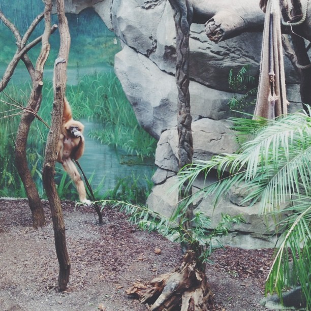How is it hanging yo?! #vscocam #zoo #cgn