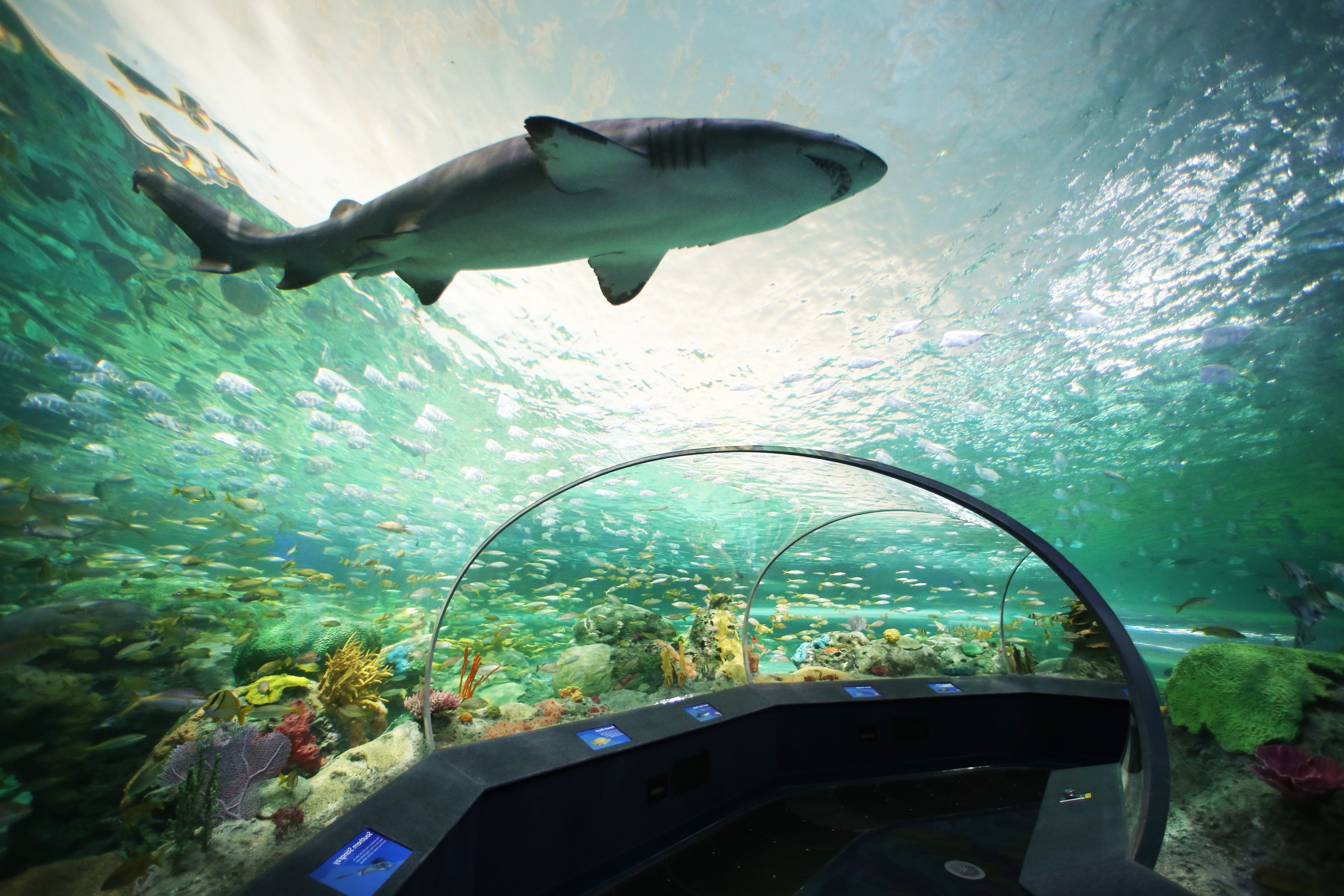 Dangerous Lagoon - Sharks-4.jpg