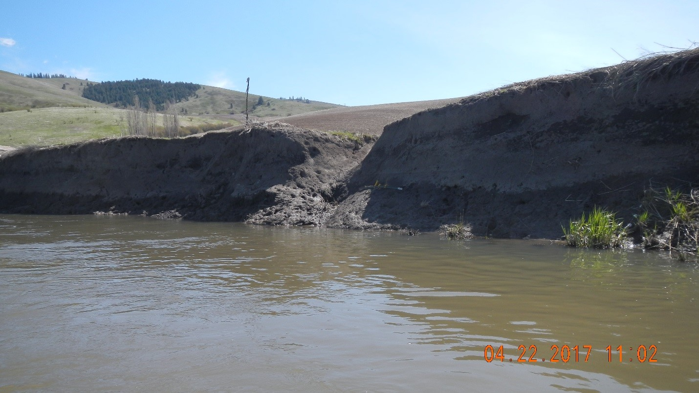 Lack of shoreline vegetation allows banks to erode and pollute our surface waters.