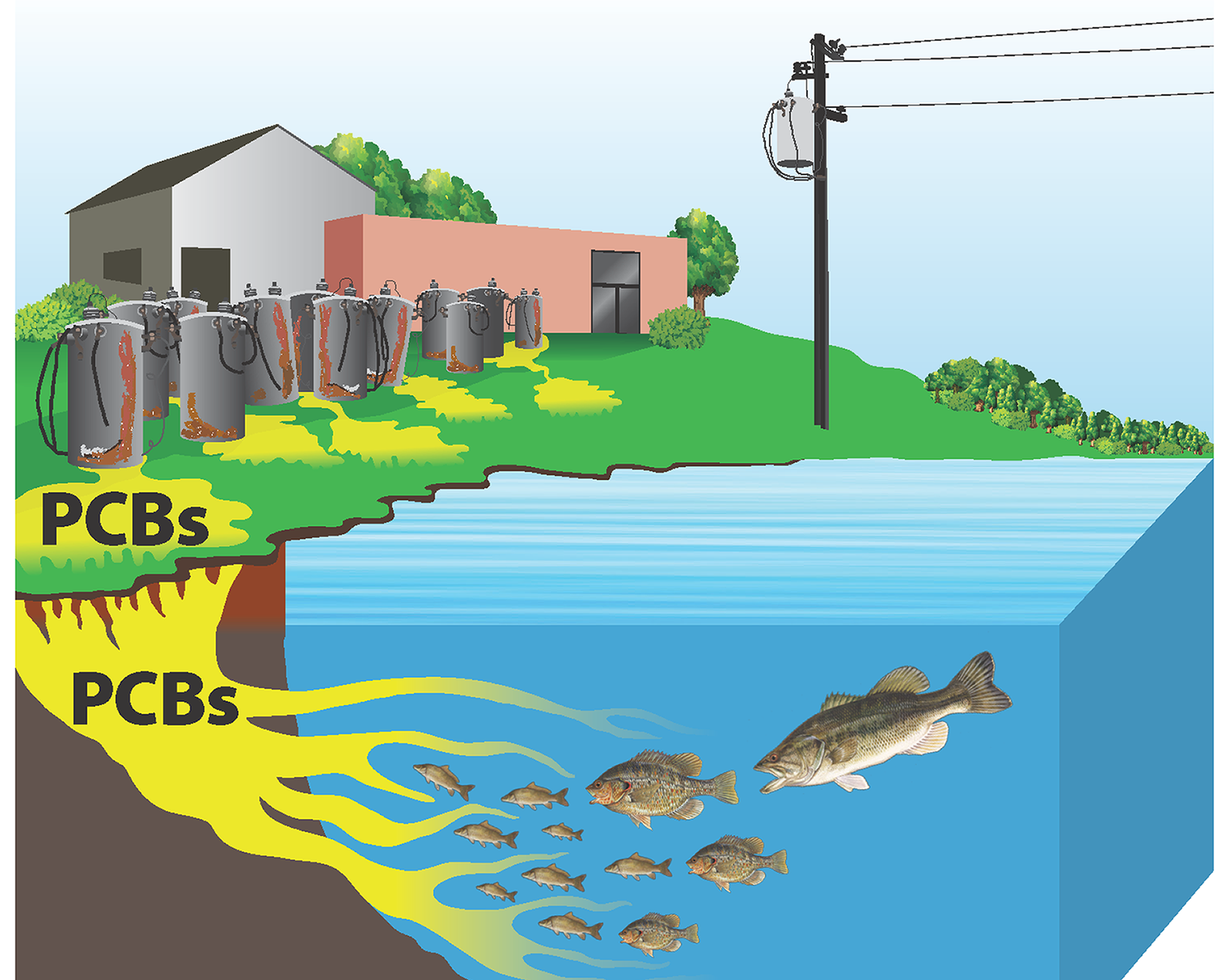 PCBs enter the water where they join the food chain and bioaccumulate in fish, making them unsafe to eat.  Image courtesy of http://eatfishwisely.org/contaminants/