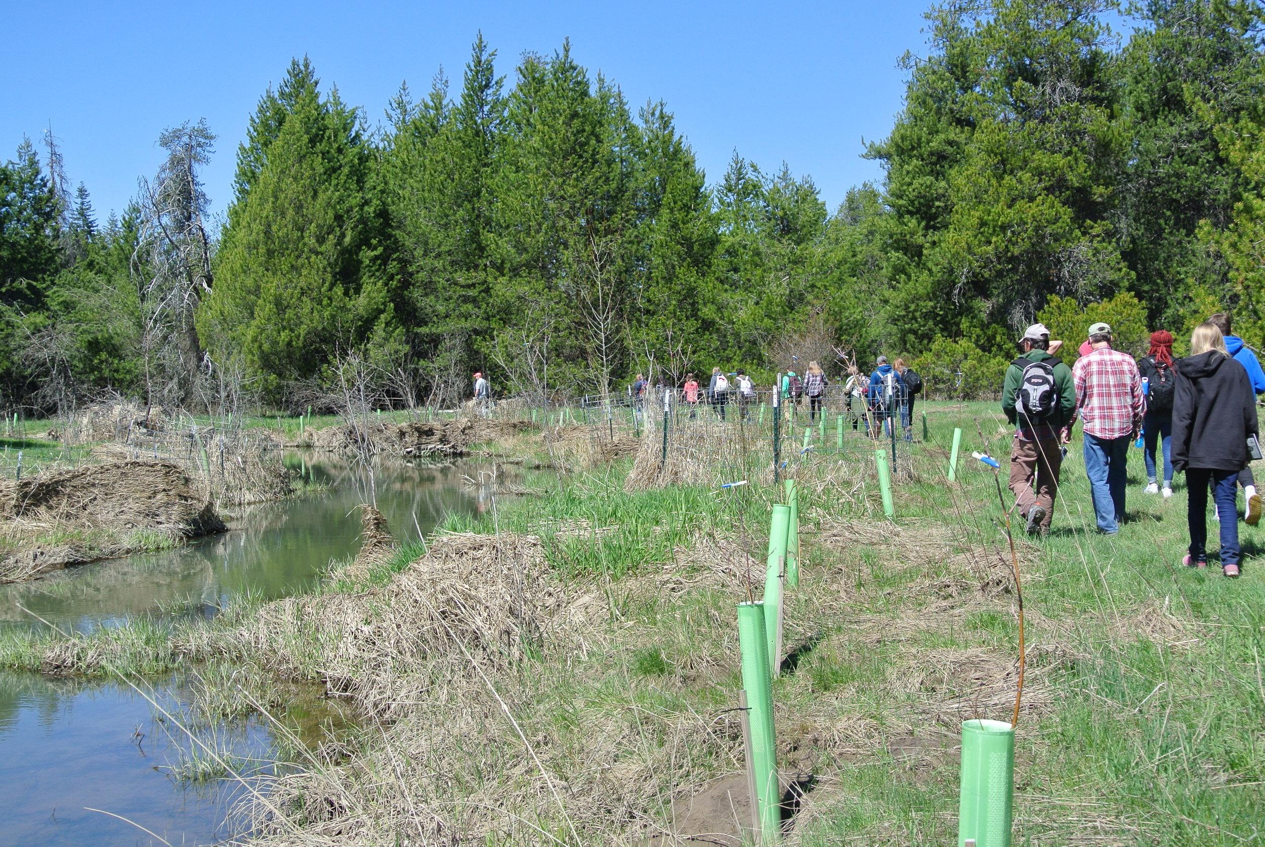 Students walk along the restored headwaters of Hangman Creek.