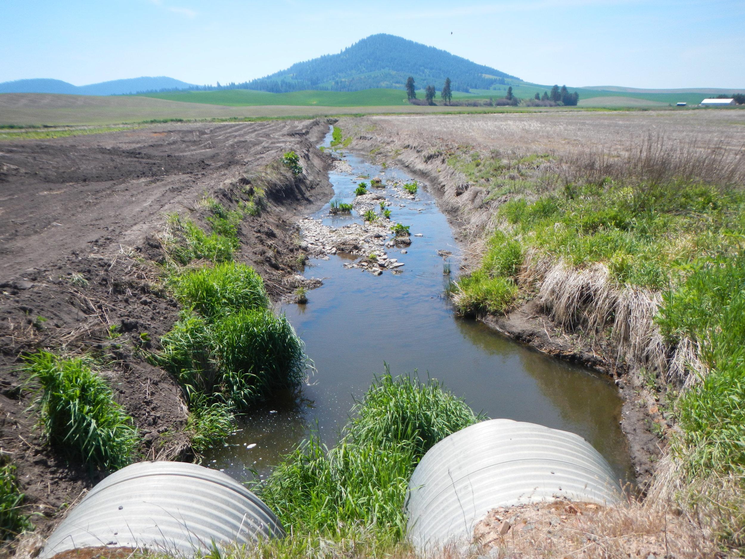 An unnamed creek near Tensed, Idaho.