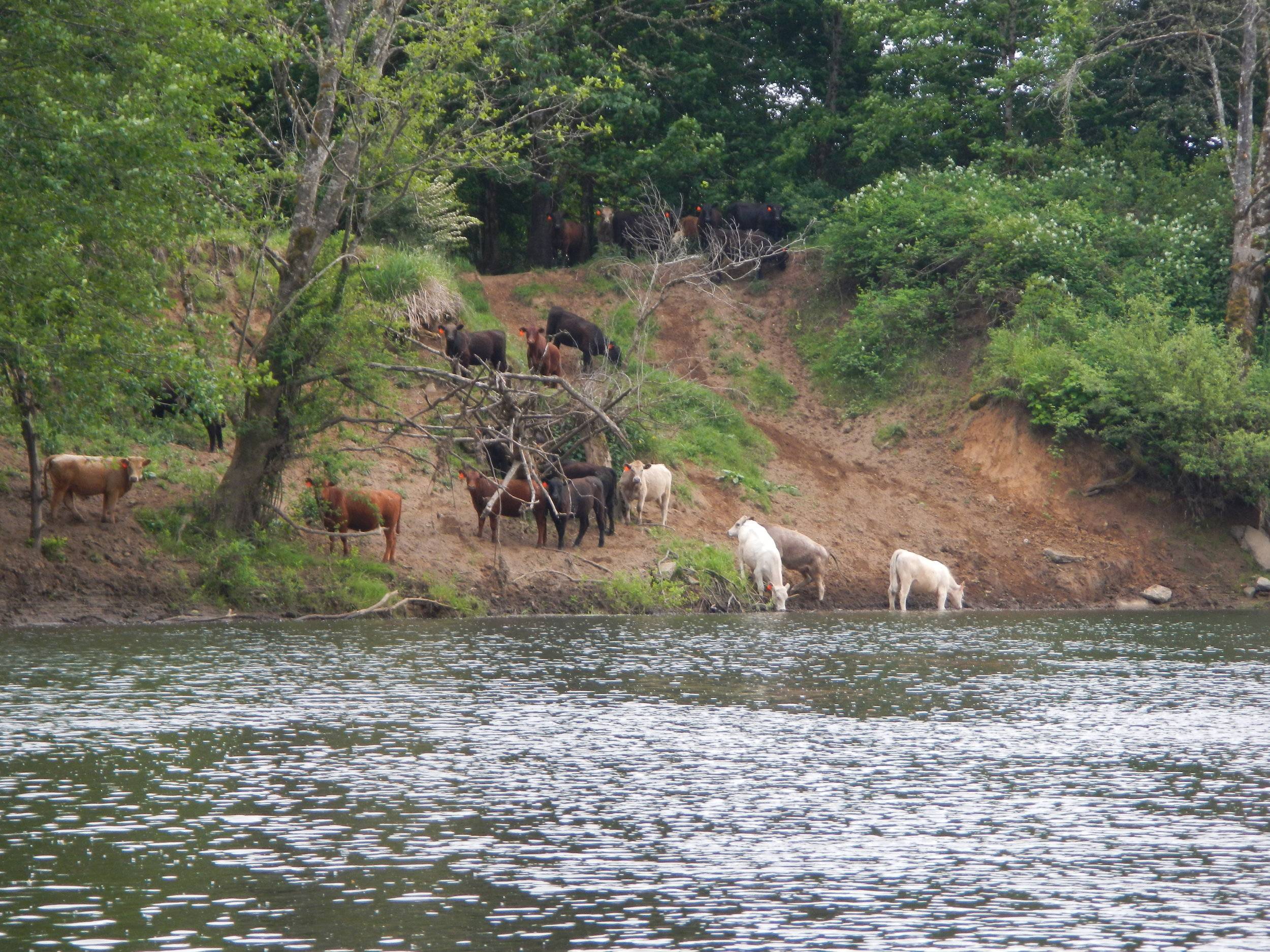 Washington Department of Ecology: (509)329-3400 - Contact this entity for:Destruction of riparian zones (landslides, removal of streamside vegetation)Livestock issues (livestock density, direct access to streams or lakes, manure management issues)click here for more information