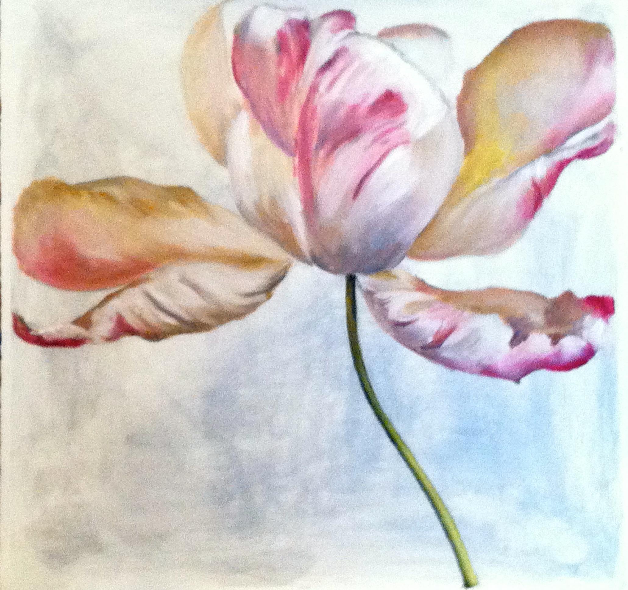 IMG_0654.jpg Tulip.jpg