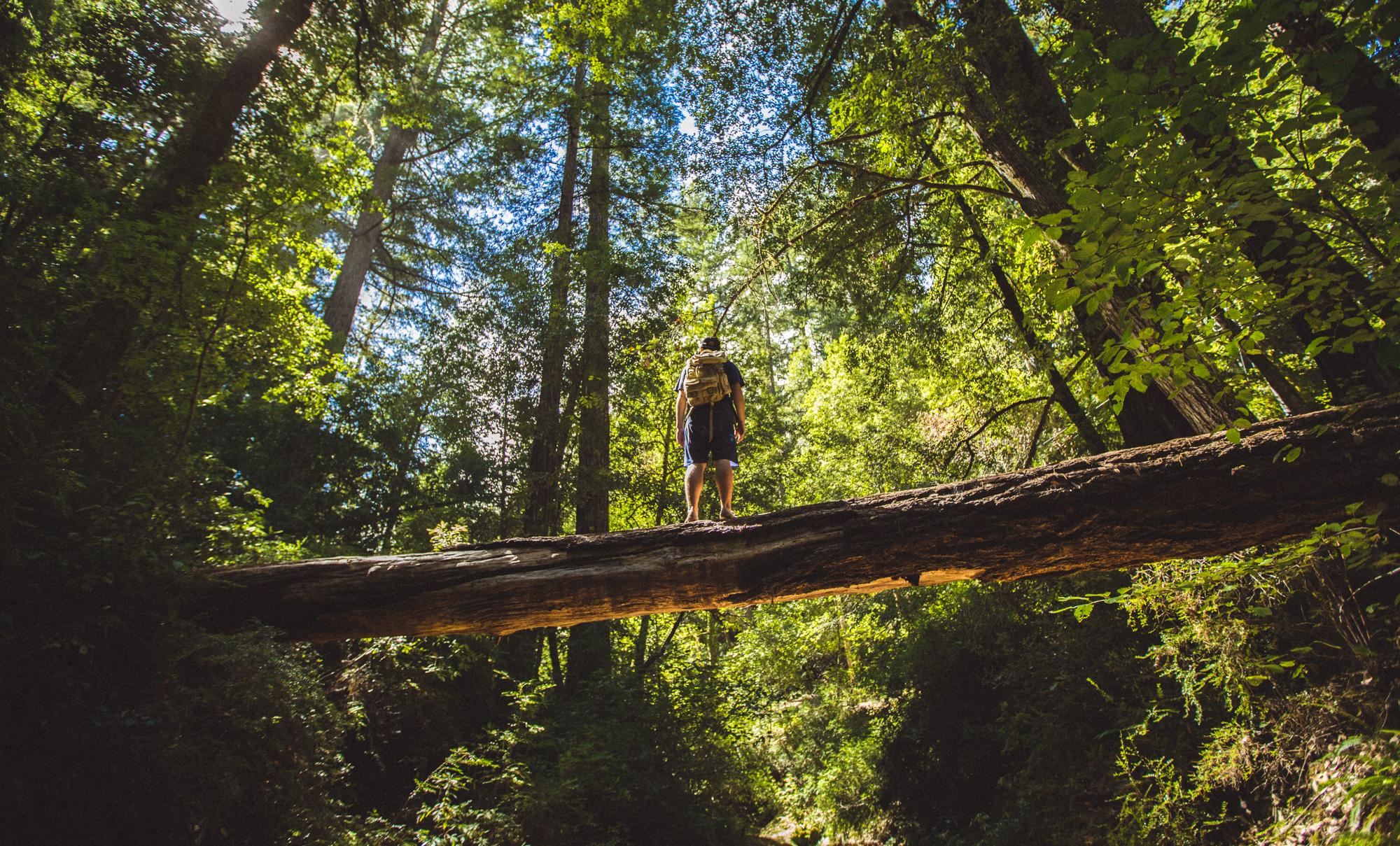 Big Basin Redwoods State Park 3.jpg