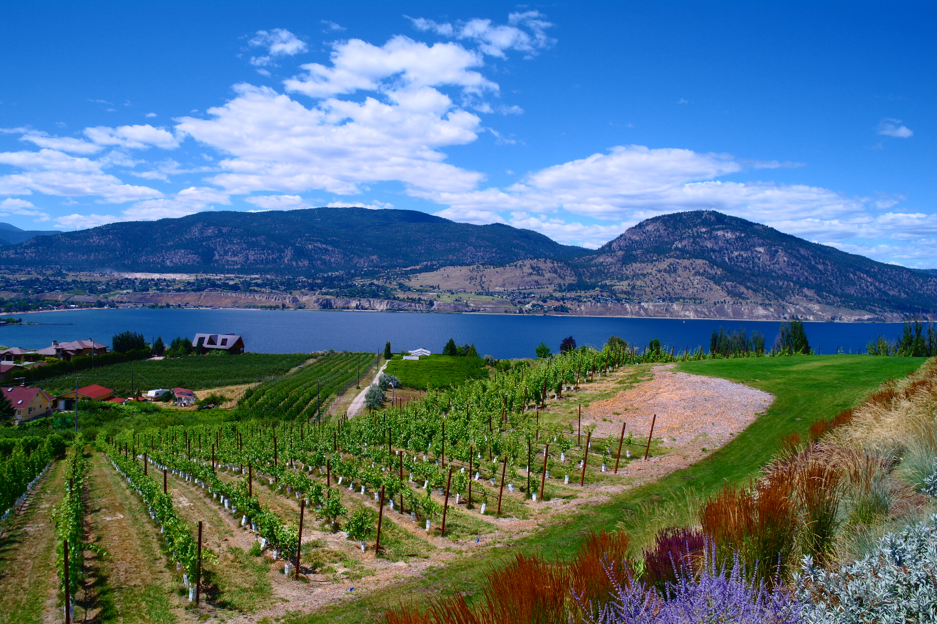 Explore the Okanagan from a Local   PERSPECTIVE