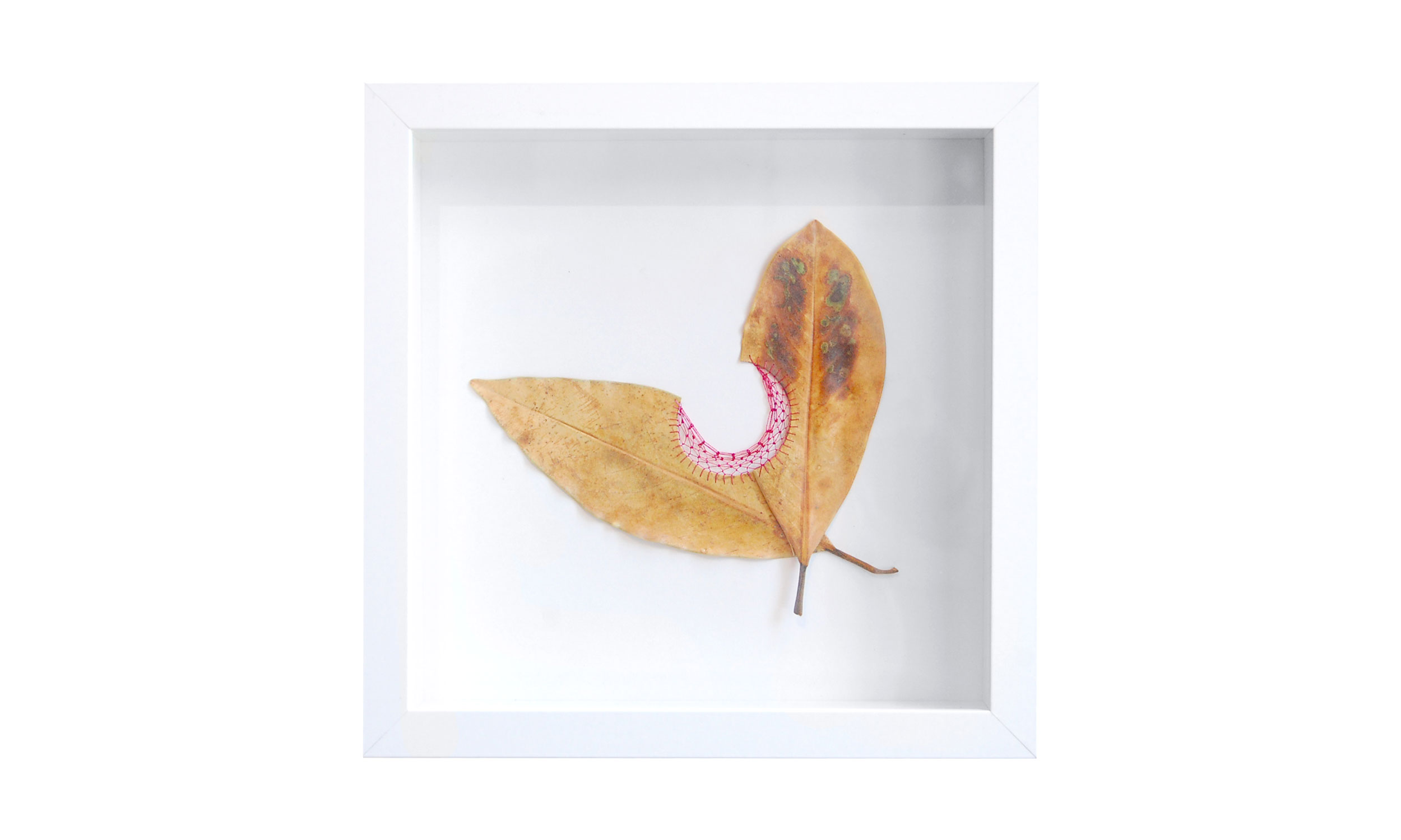 """Leaf Quartet III,  hand cut and stitched leaves, 10"""" x 10"""", $400    Contact us for purchase"""