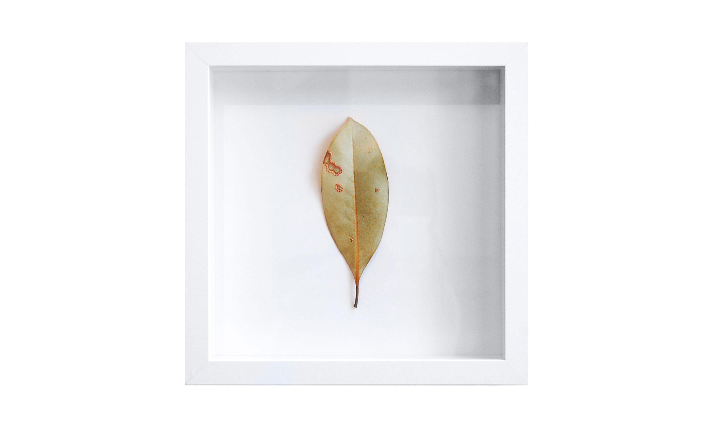 "Leaf Quartet IV,  stitched leaf, 10"" x 10"", $400    Contact us for purchase"