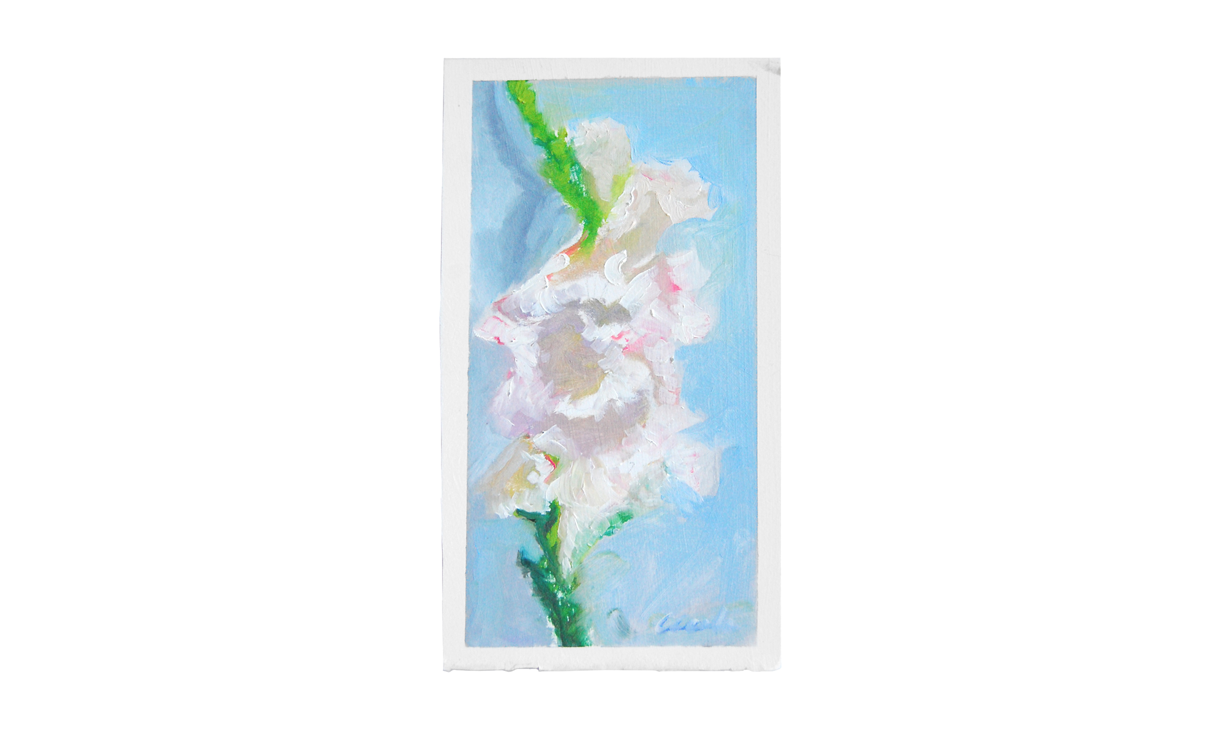 "Gladiola,  oil on paper, 7"" x 12"", $175    Contact us for purchase"