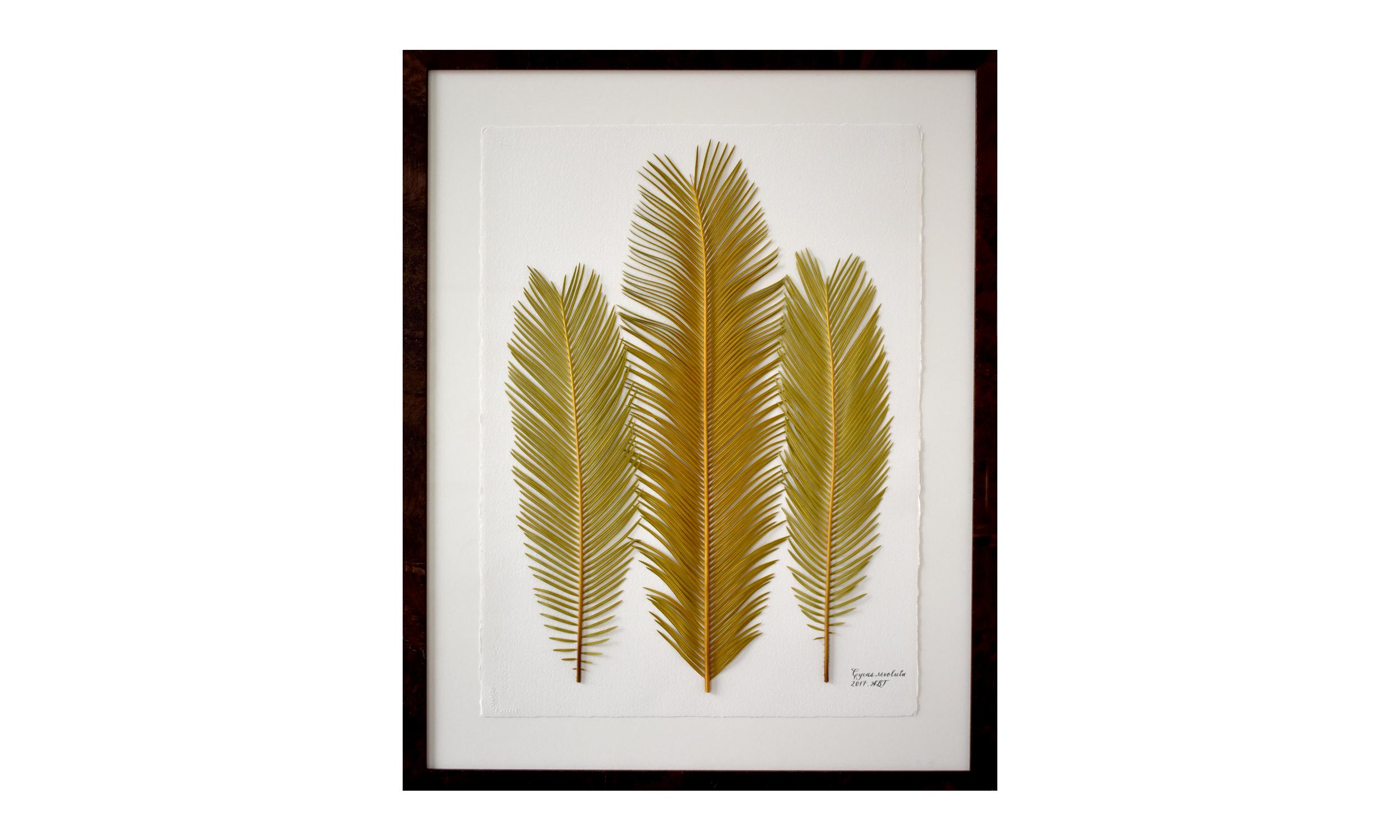 Cycas revoluta,  30.5 x 37.25 inches, $ 3,100 SOLD