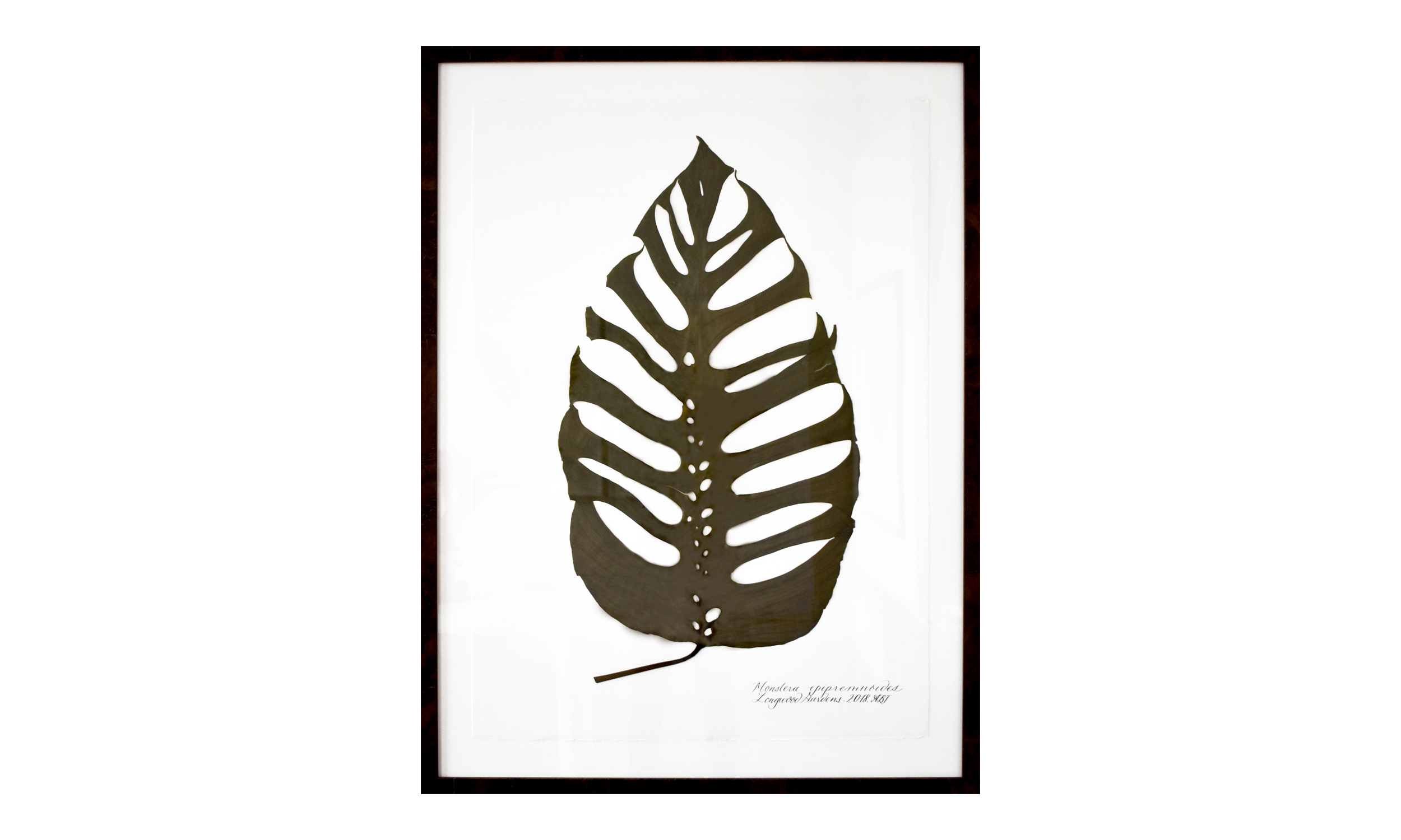 Monstera epipremnoides,  36.5 x 49 inches, $ 3,800    Contact us for purchase