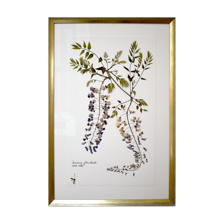 Copy of Wisteria floribunda