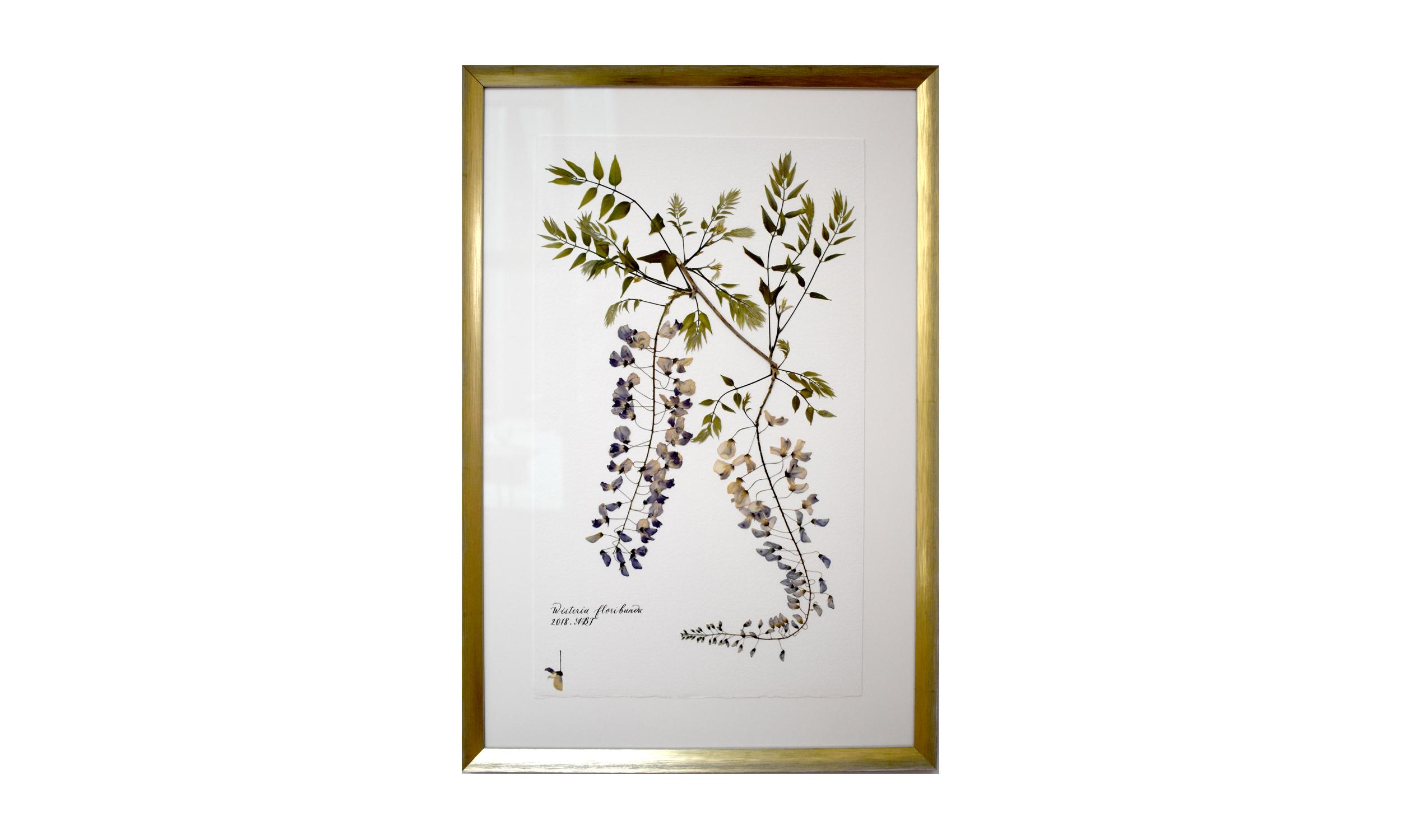 Wisteria floribunda,  16.5 x 25 inches, $ 1,200 SOLD