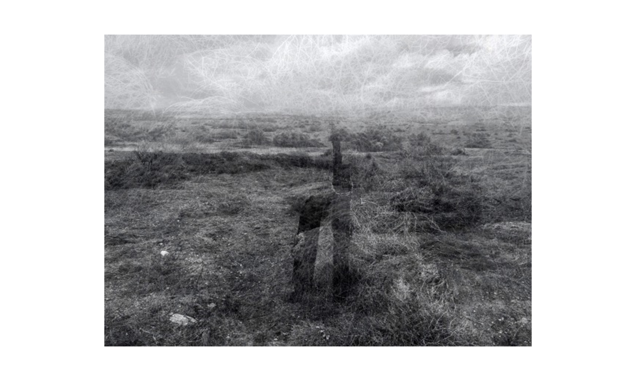 Fields: Warn,  archival inkjet print, 18 x 24 inches, framed, $525    Contact us for purchase