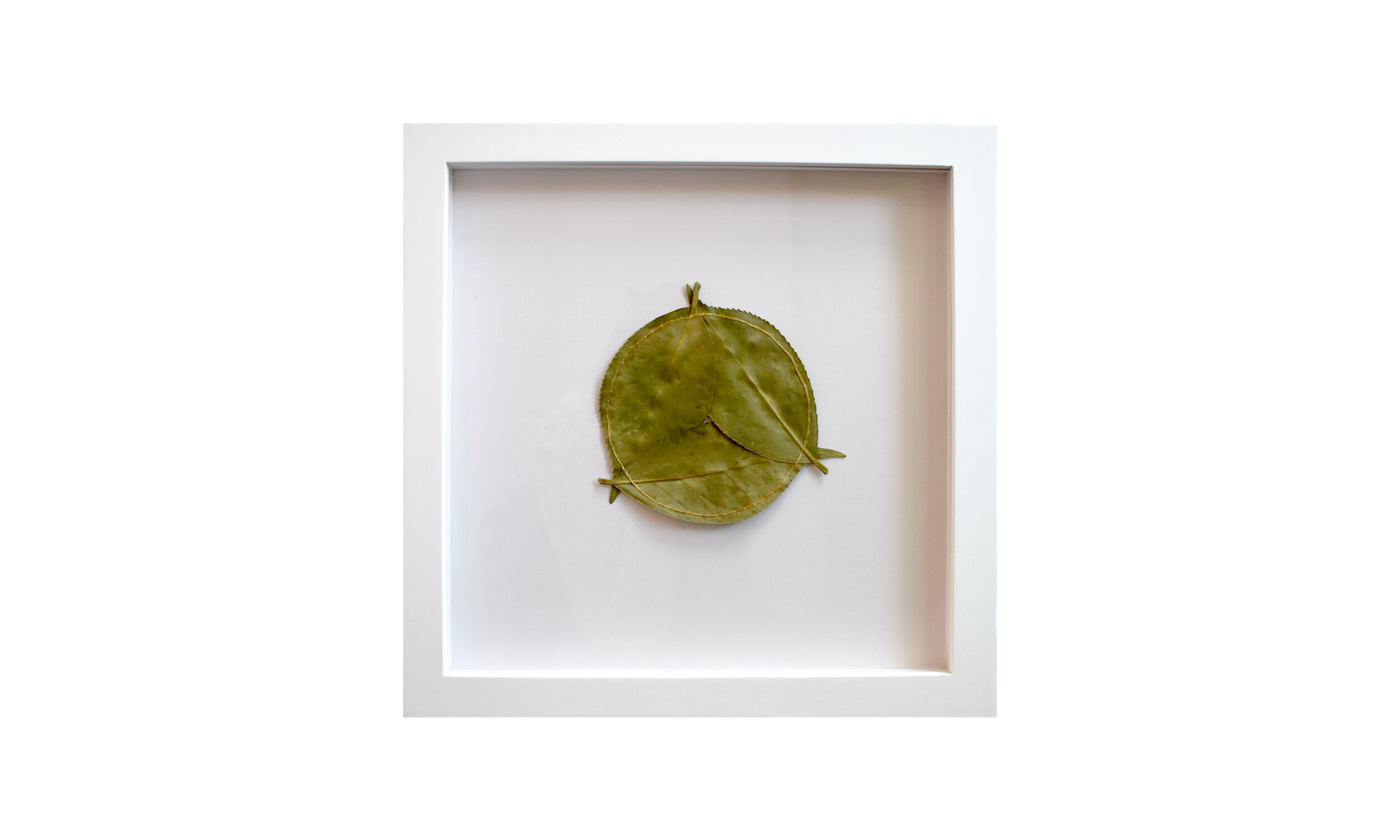 """Circle Inscribed,  stitched camellia leaves, 11.25"""" x 11.25"""", framed $850    Contact us for purchase"""