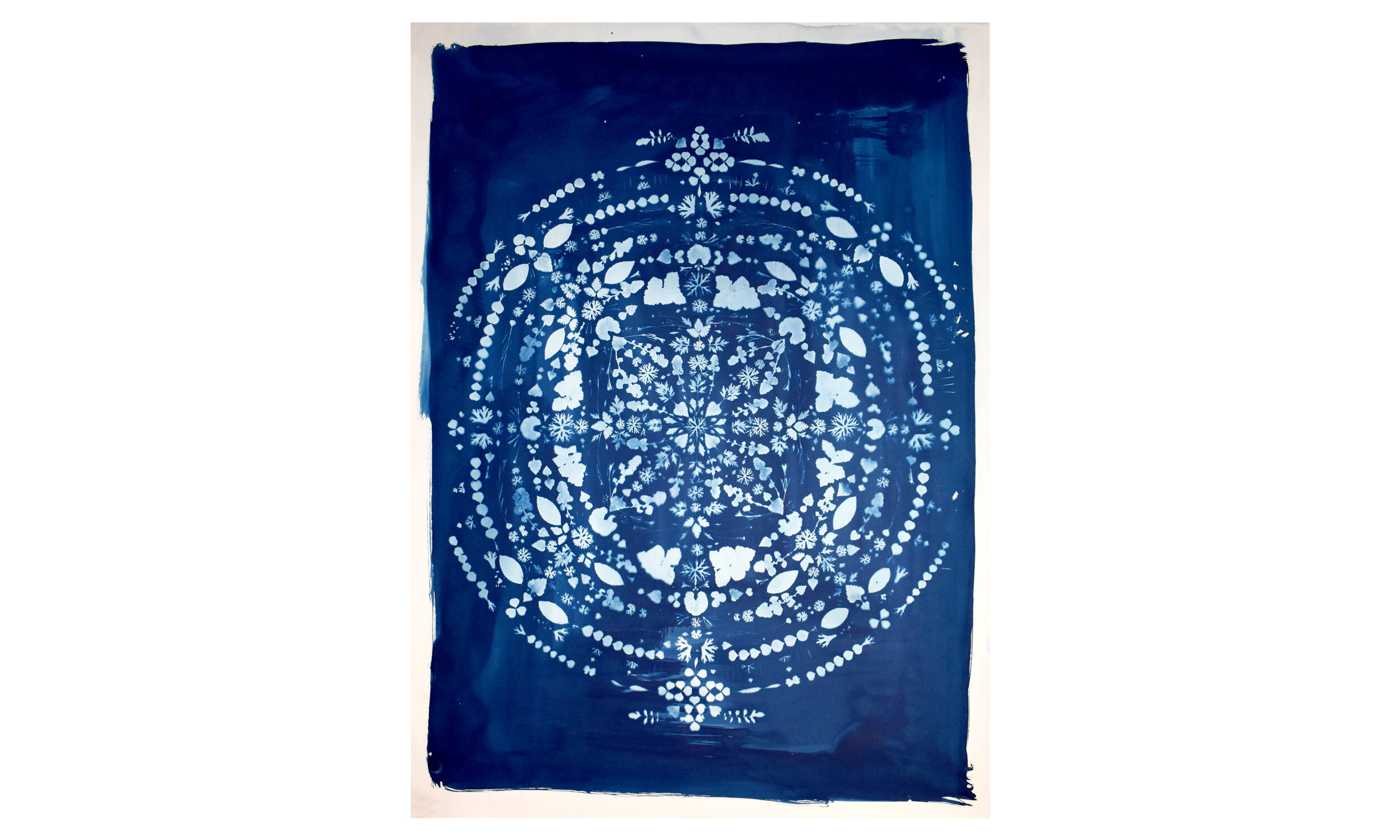 Earthly Mandala I,  cyanotype on paper 40.25 x 55.25 inches, unframed $ 3,500    Contact us for purchase