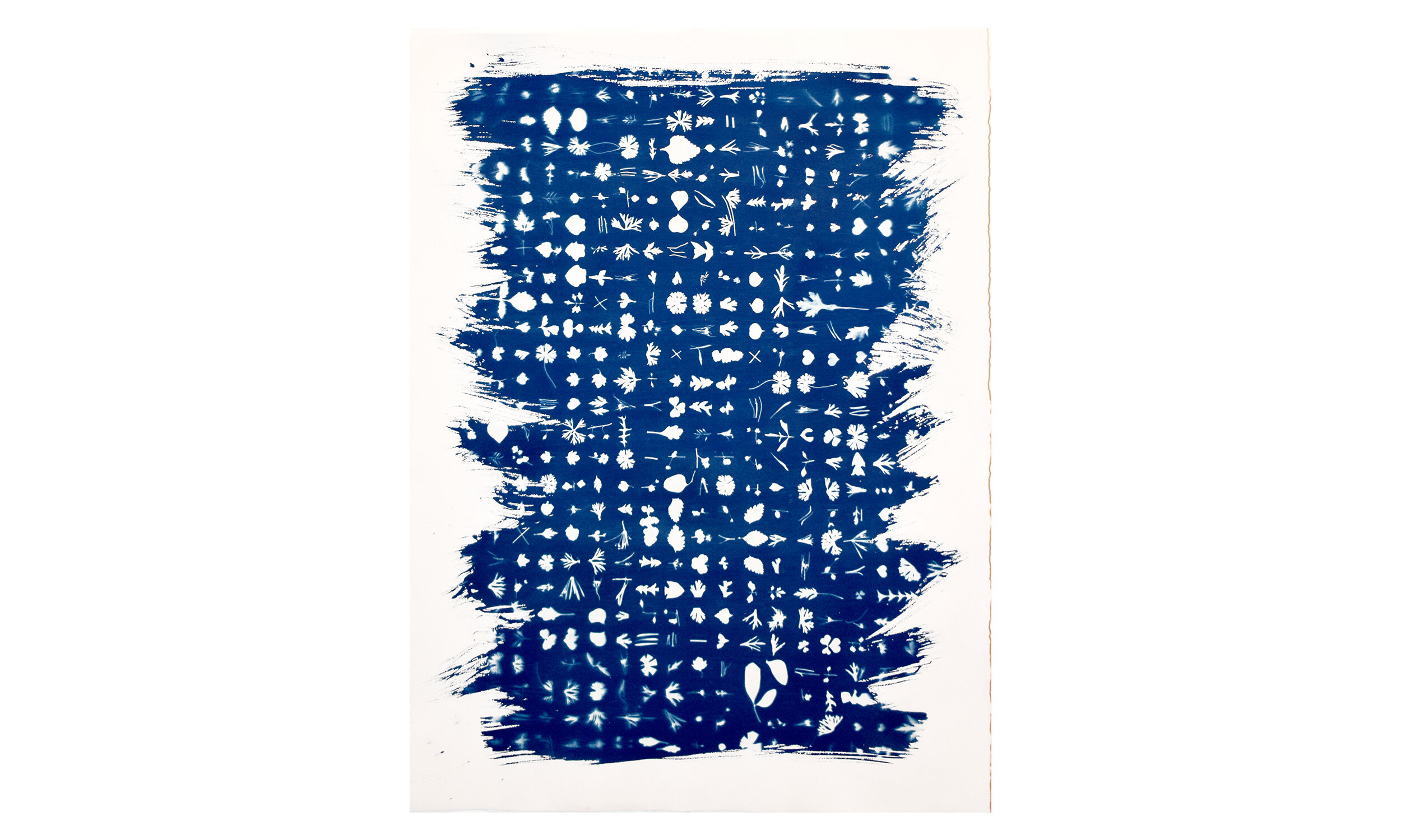 """Reading through the lines,  cyanotype on paper, 22"""" x 30"""", unframed, $1,100    Contact us for purchase"""