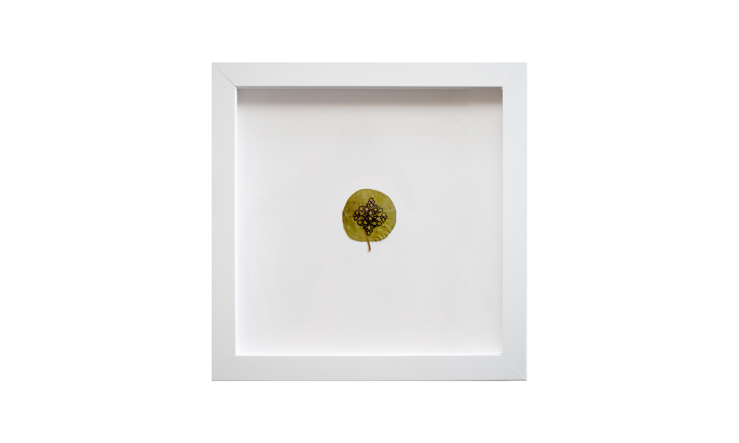 """Micro Mandala I & II,  embroidered caper leaves 11.25"""" x 11.25"""" each, framed $ 1,000 (set of two)    Contact us for purchase"""