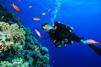 Baja Diving