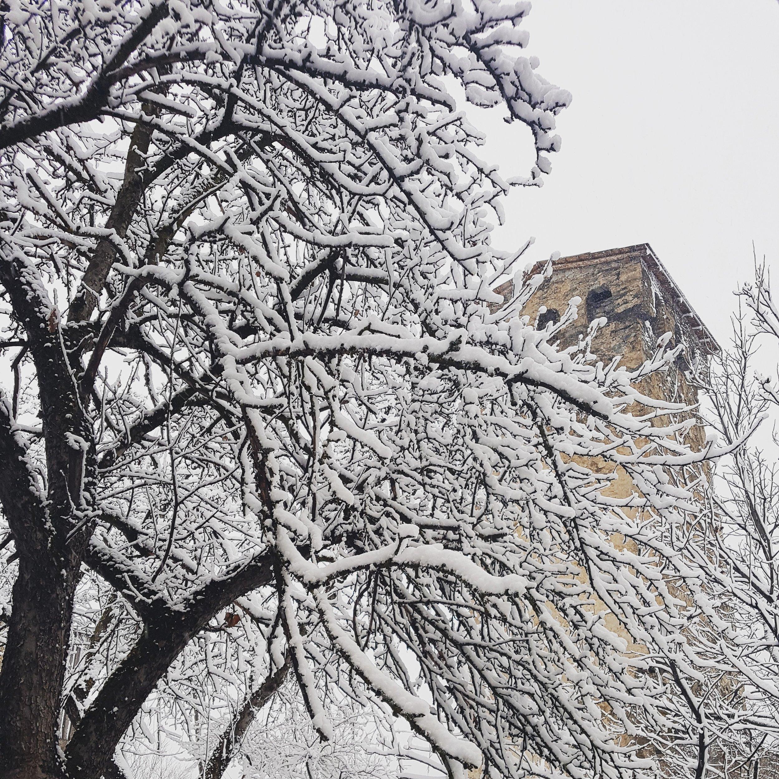 Fresh snow in Mestia.jpg