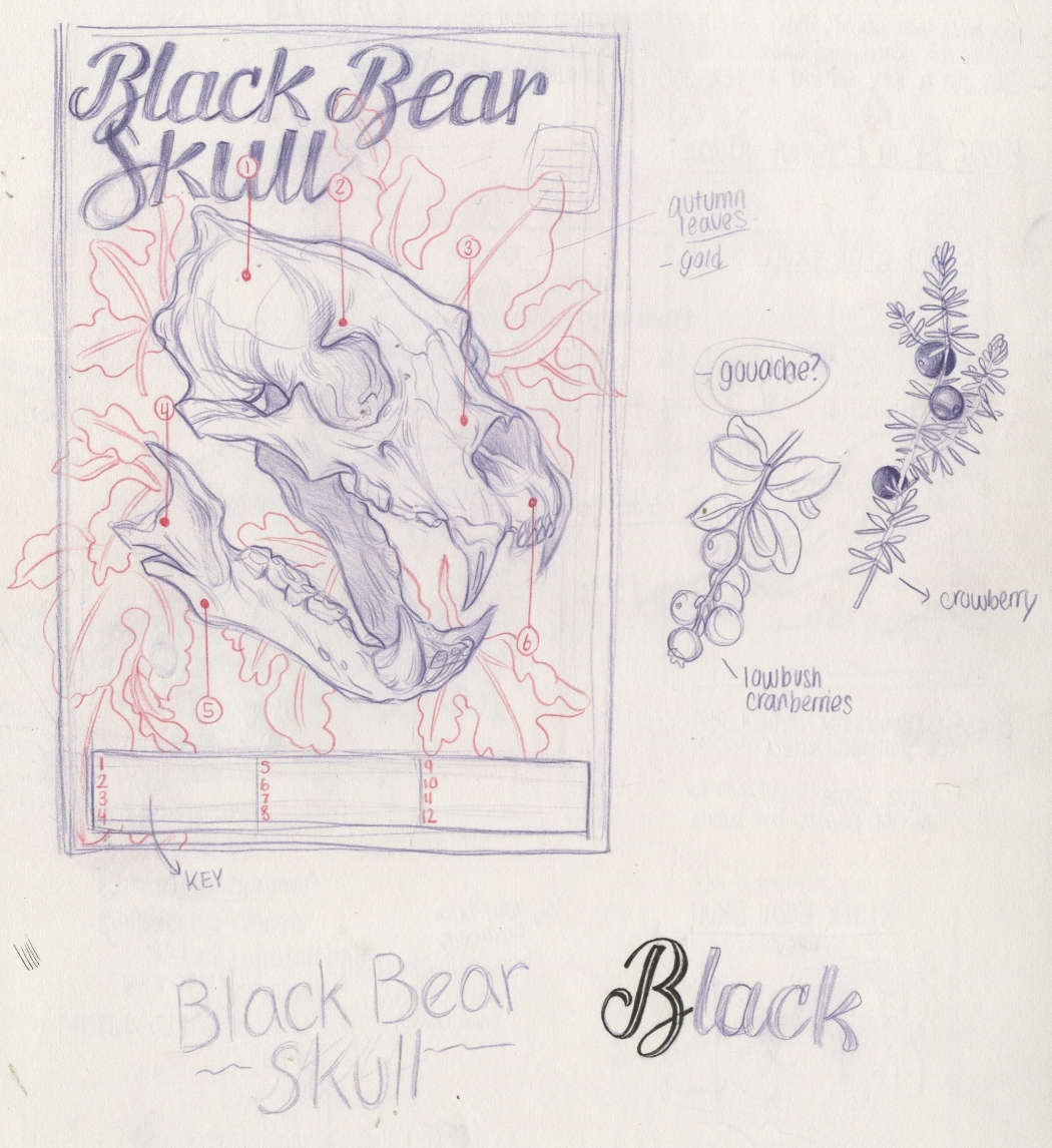 Bear skull layout idea.jpeg