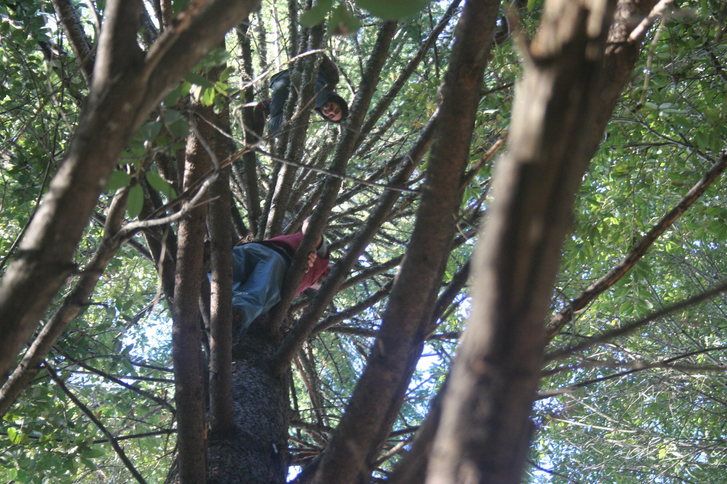 Friends Loren and Pierce in a Douglas Fir tree, in a Douglas Fir / Tanoak forest.