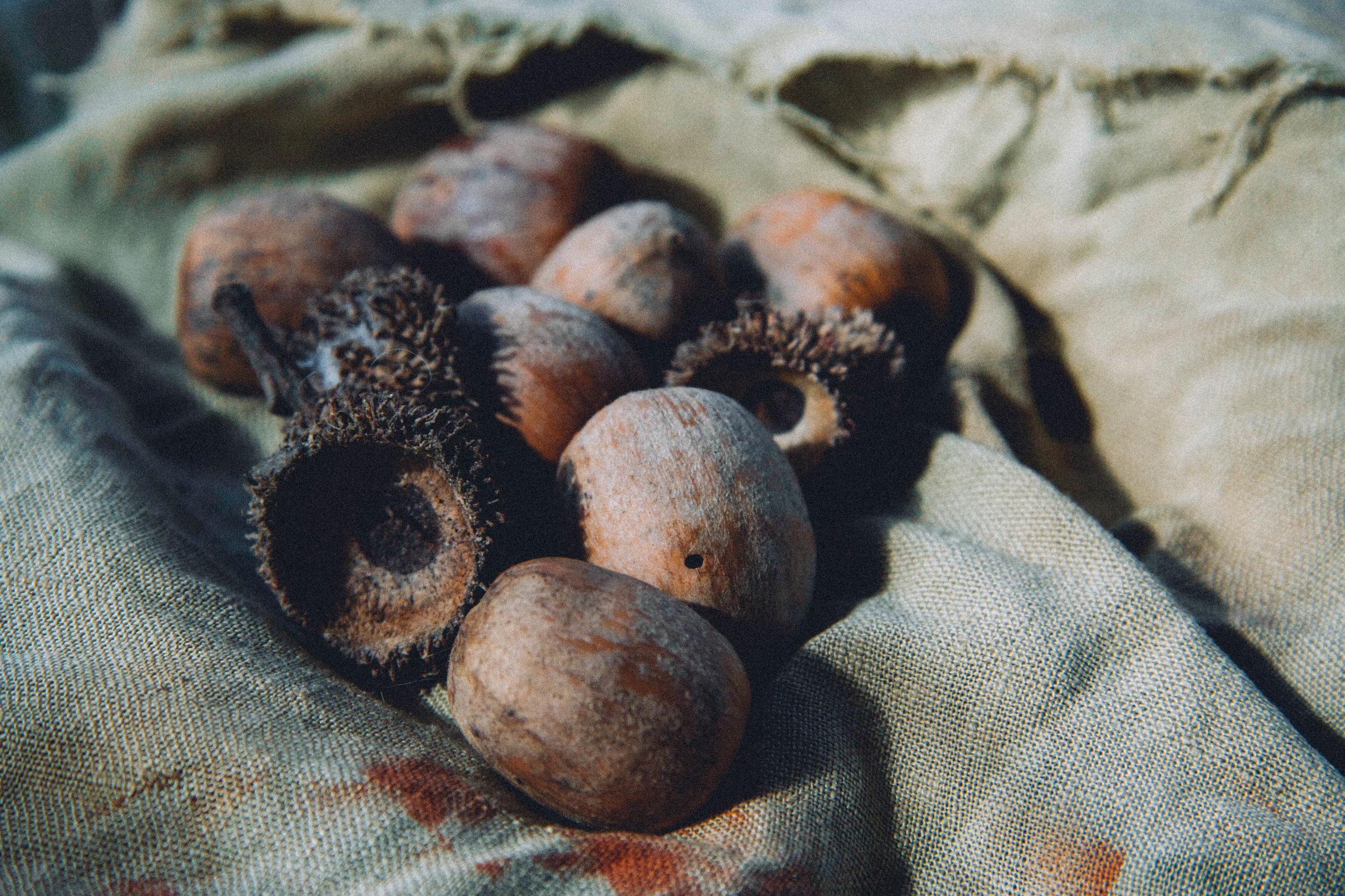 Tanbark cup and acorns.