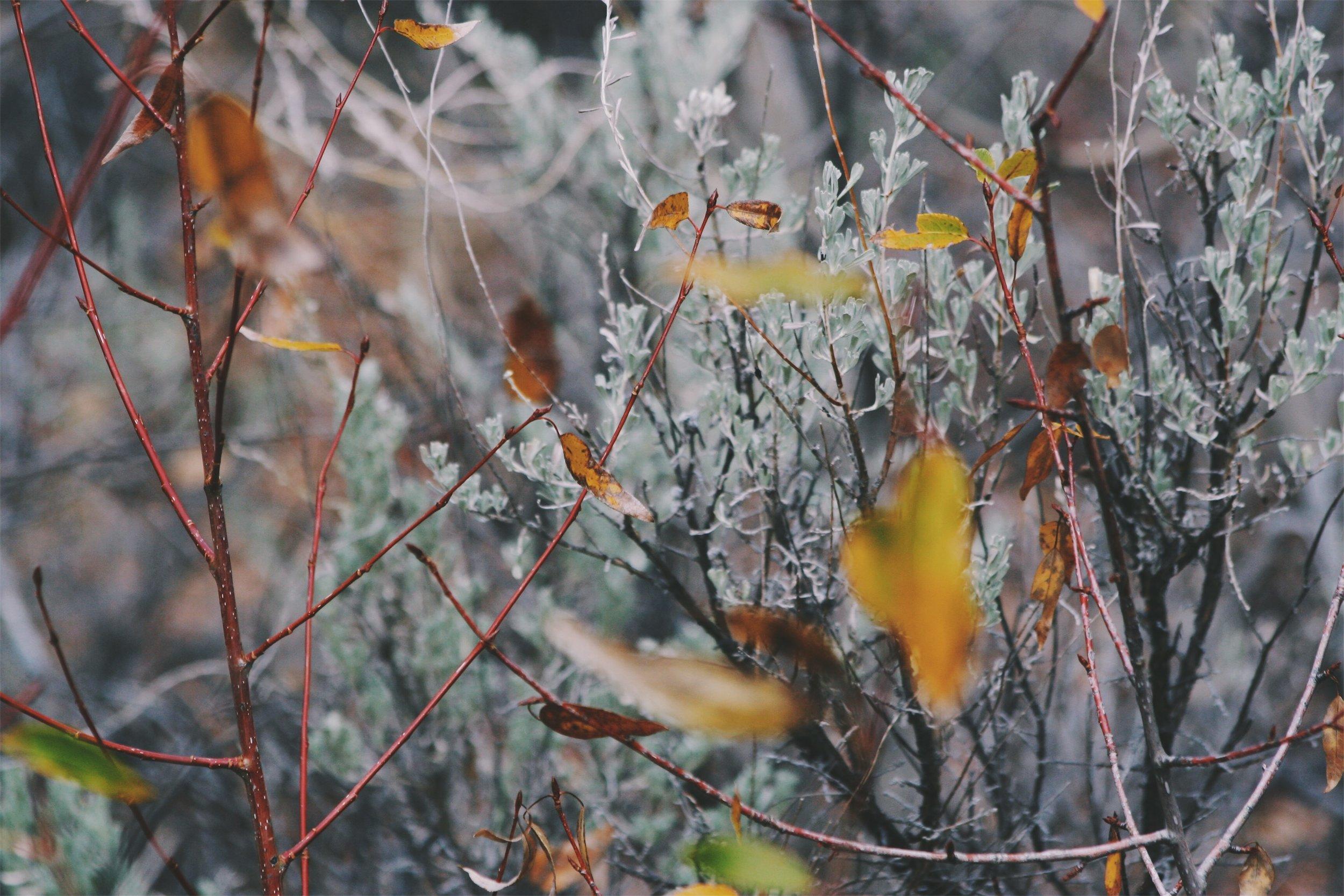 Cottonwood / Willow / Sagebrush