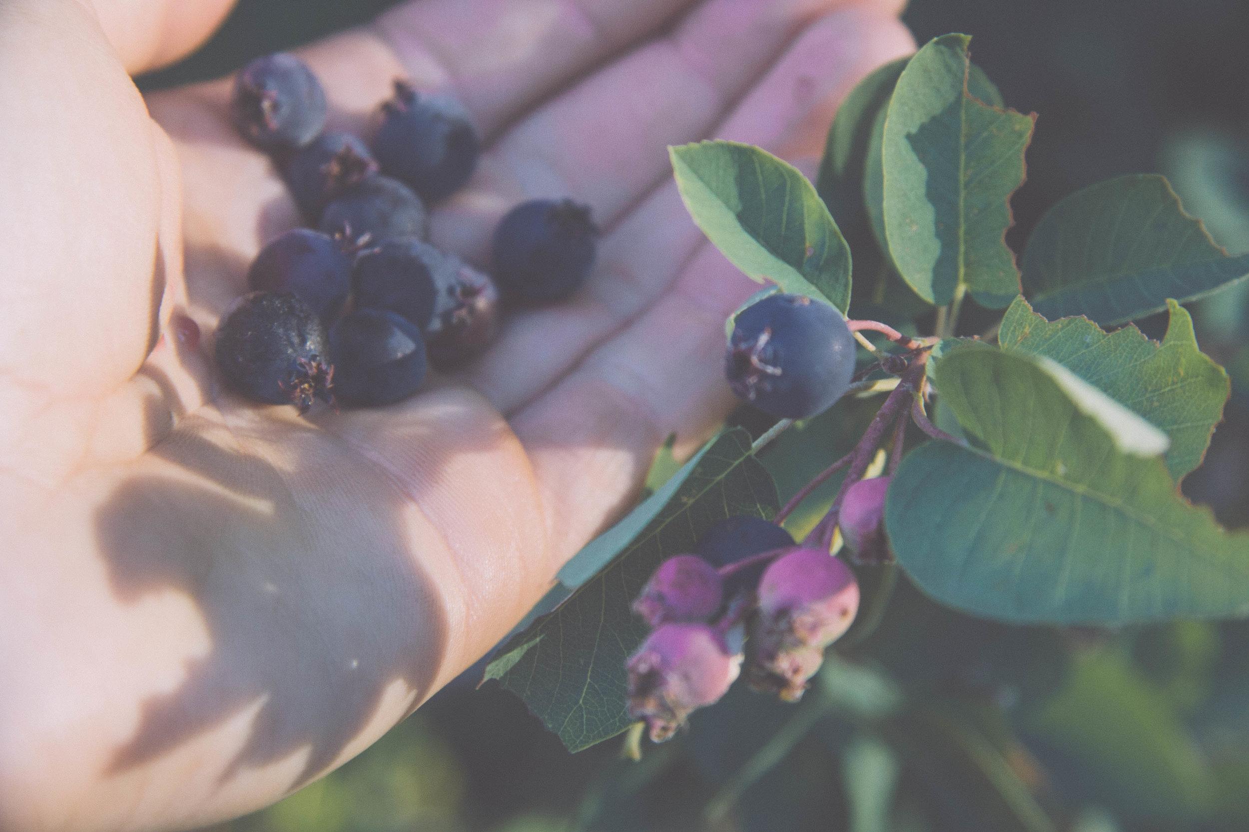 Serviceberry.