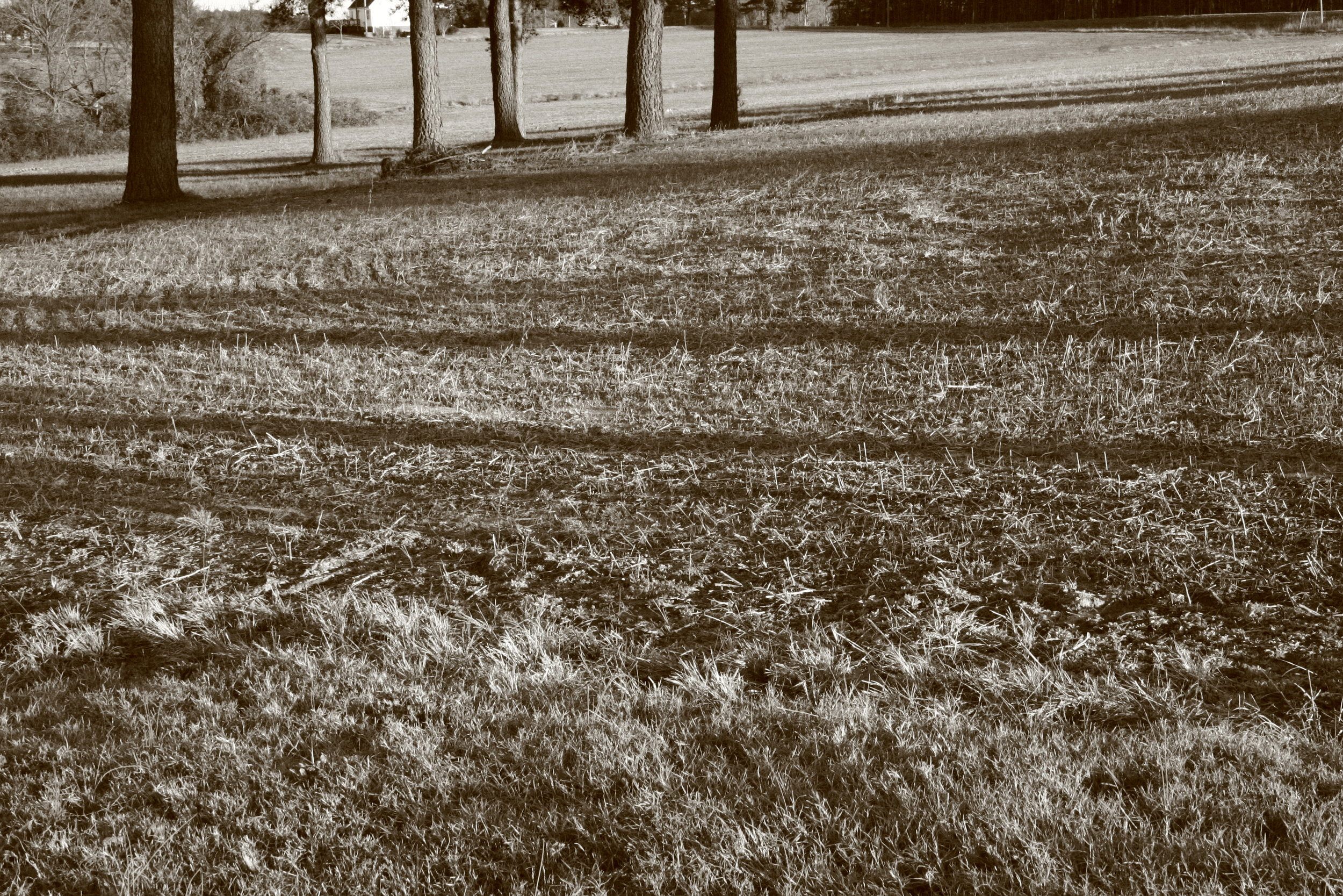 Soybean field in winter at Piercy family farm.