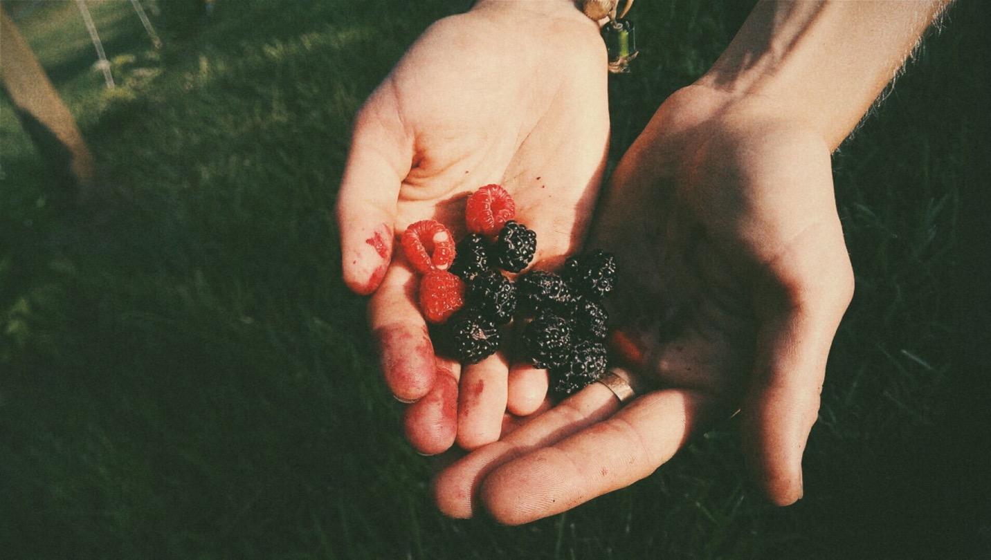 Raspberry, Blacky Raspberry berries from my dad's farm, summer 2015.